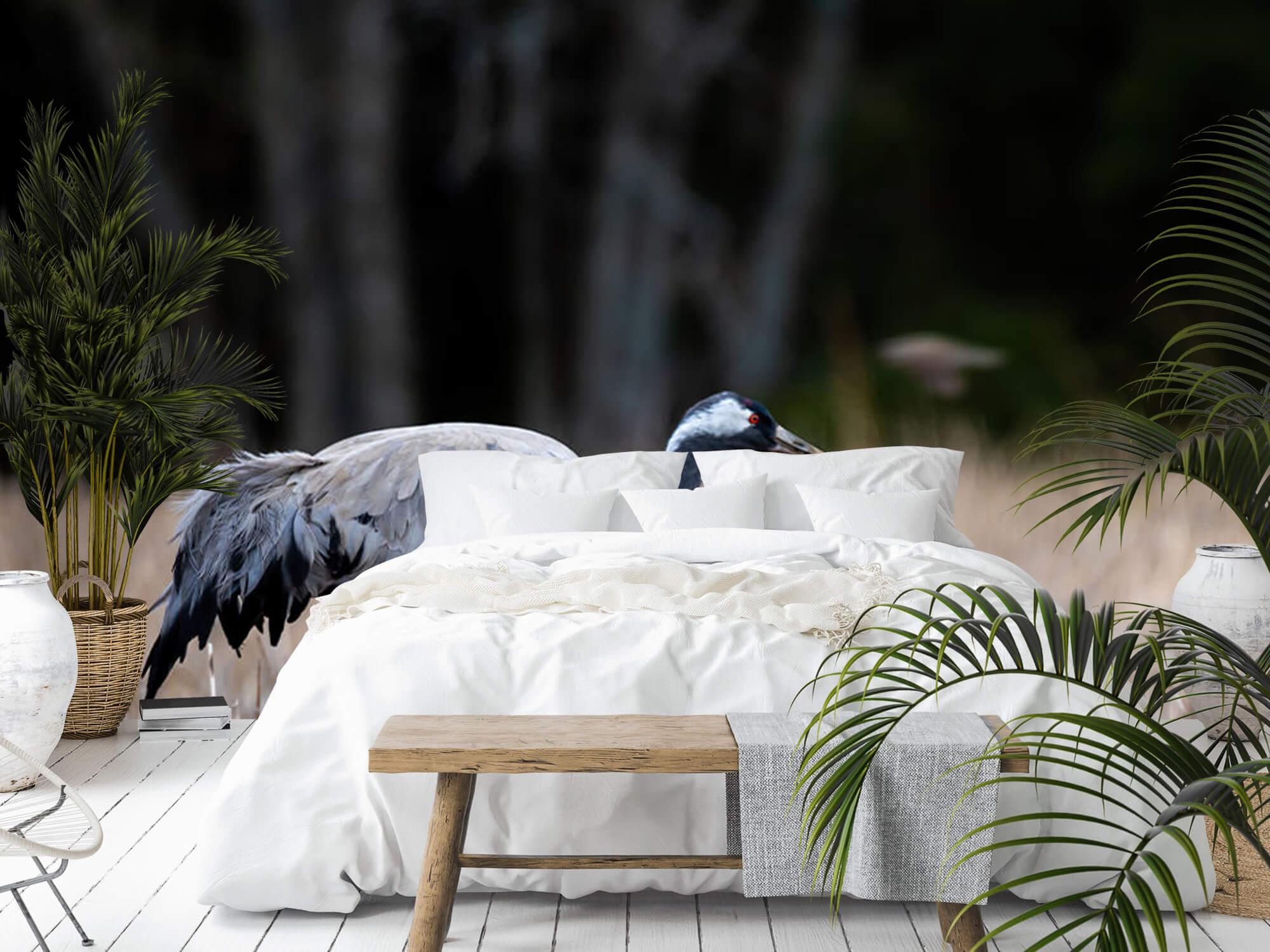 Lopende kraanvogel 9