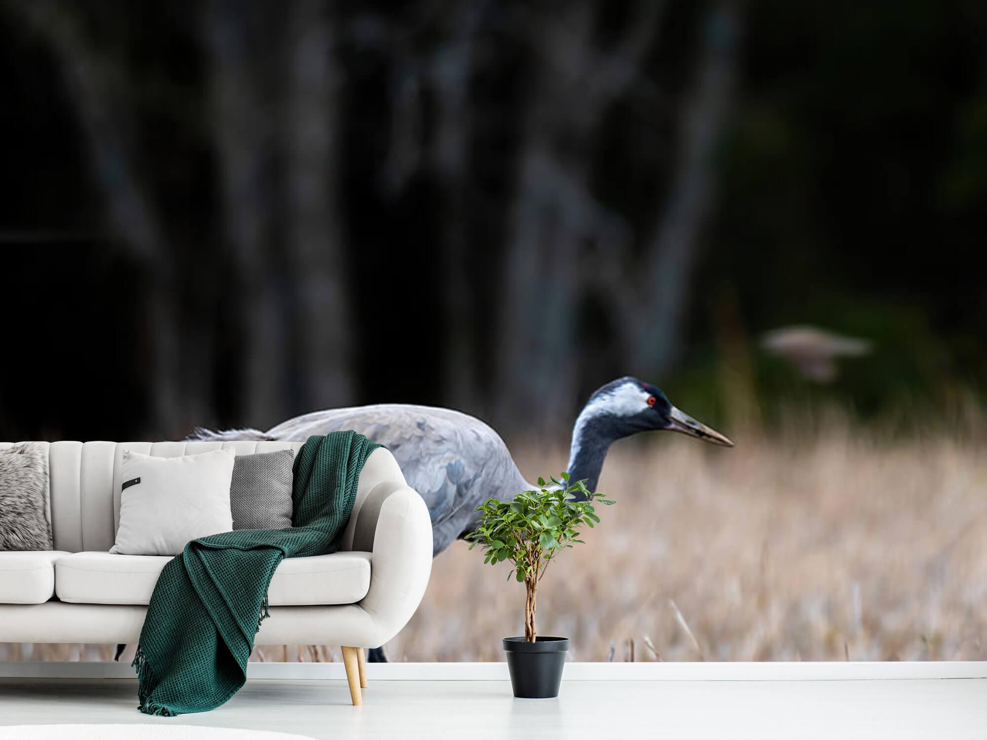 Lopende kraanvogel 10