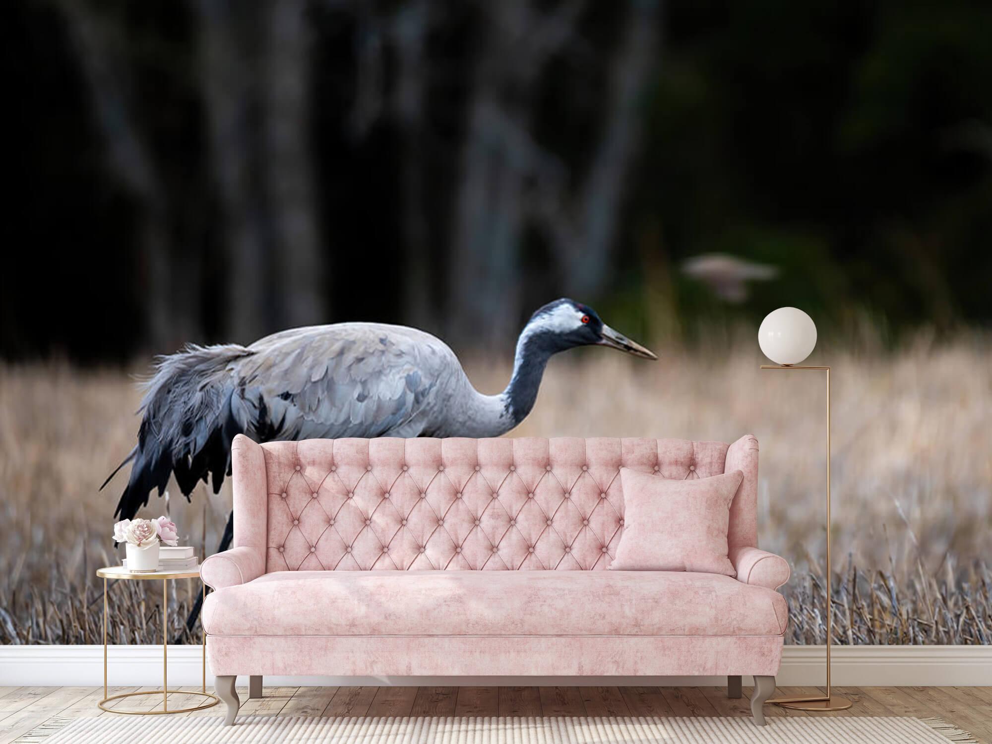 Lopende kraanvogel 6