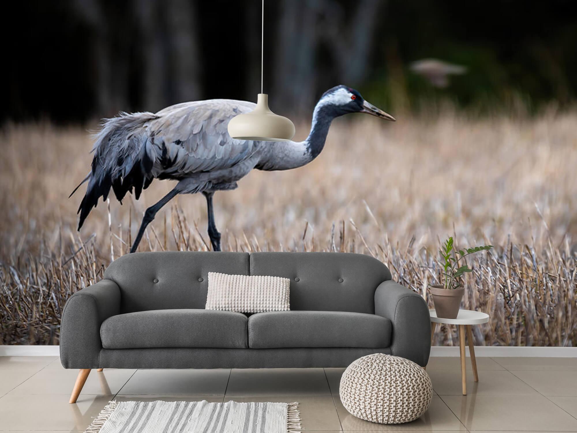 Lopende kraanvogel 2