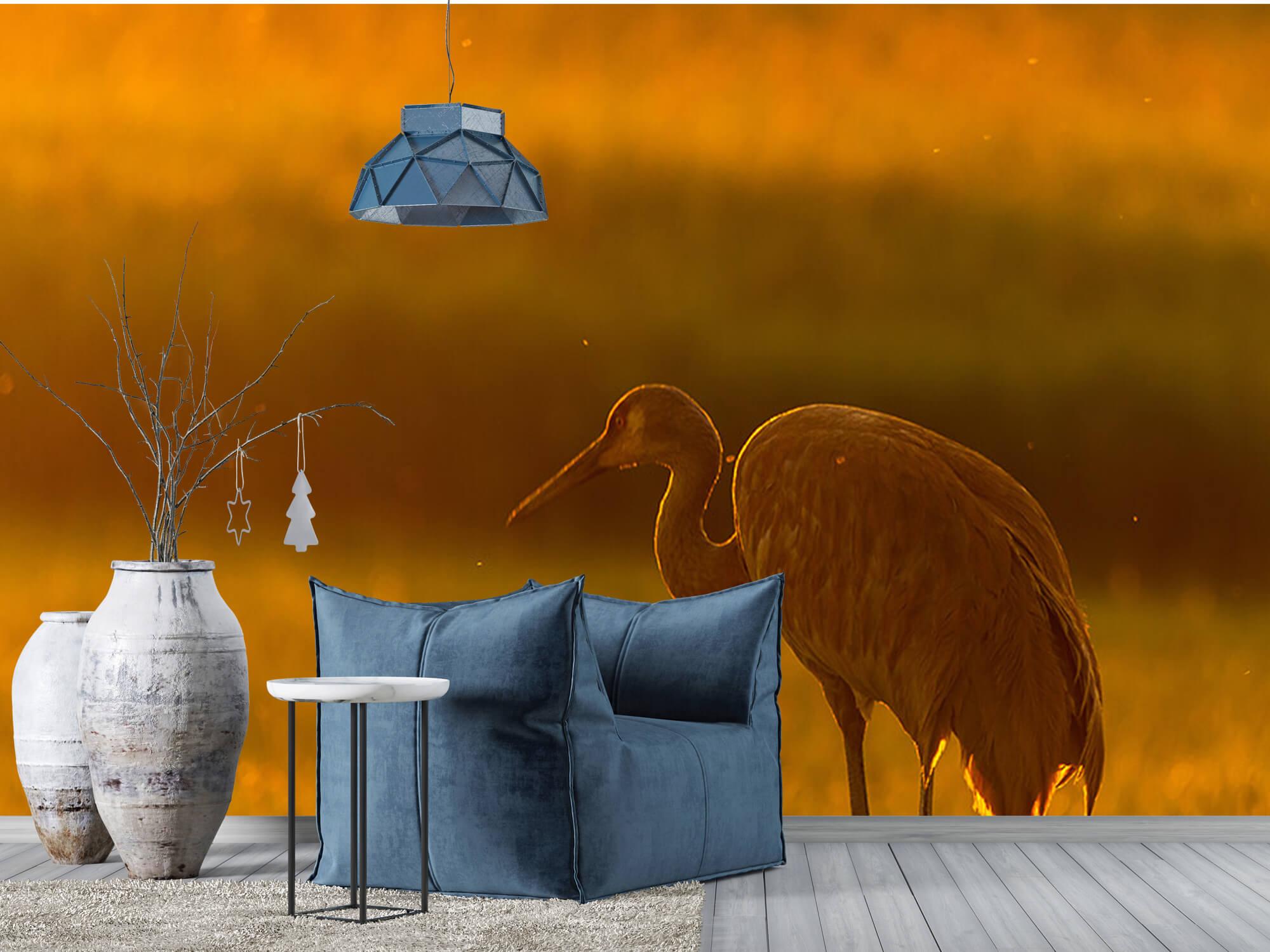 Kraanvogel met zonsondergang 8
