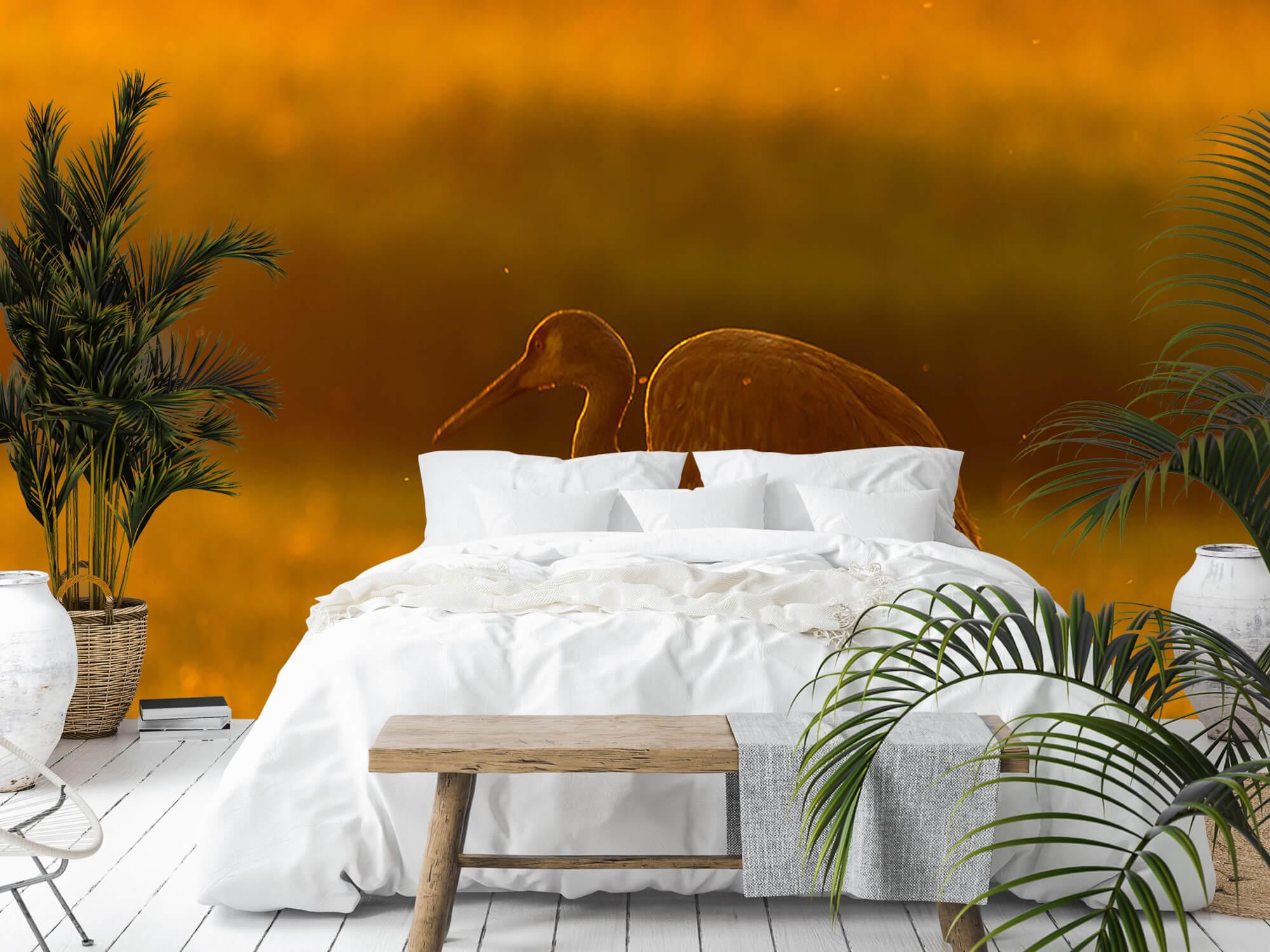 Kraanvogel met zonsondergang 6