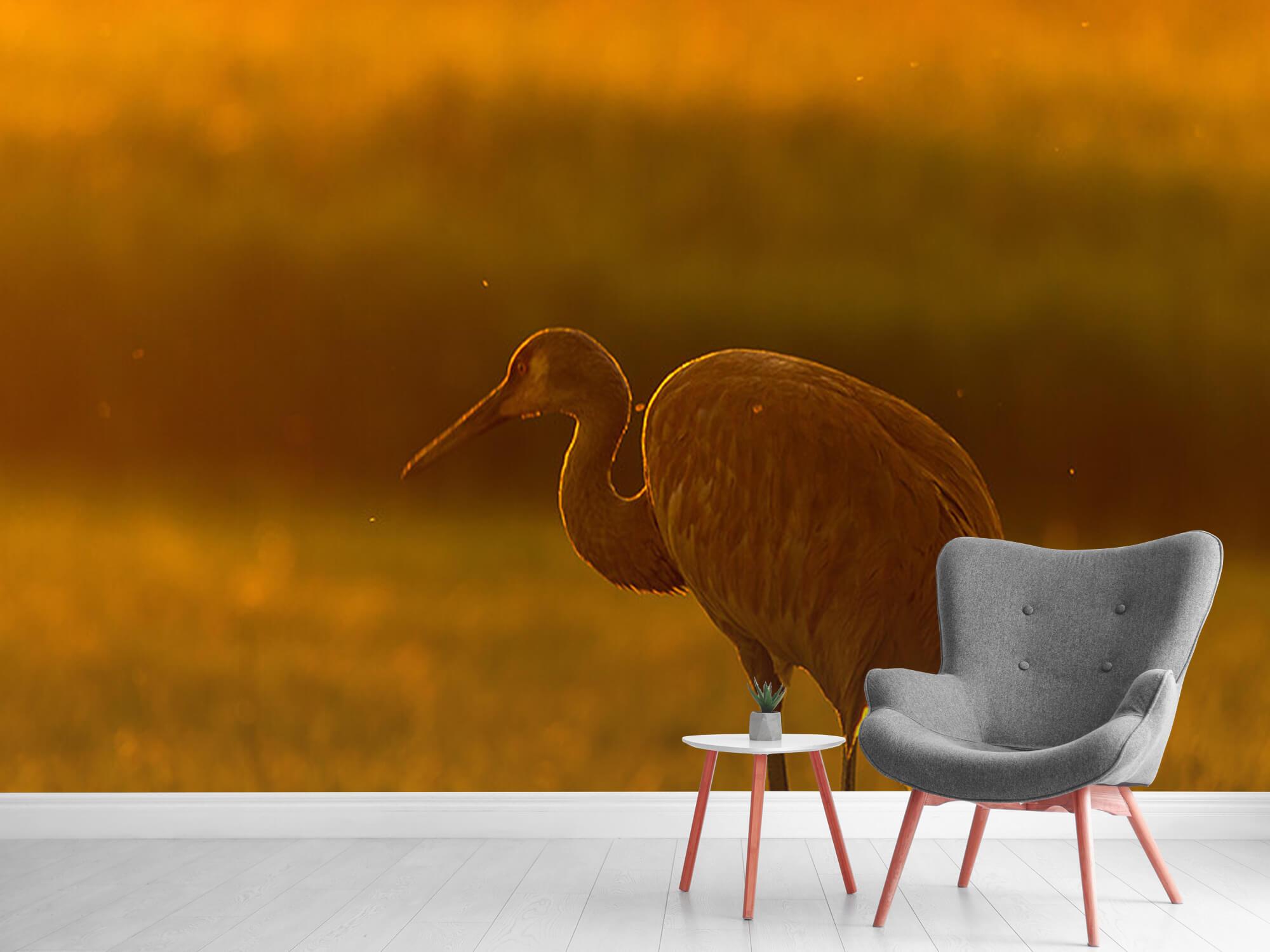 Kraanvogel met zonsondergang 11