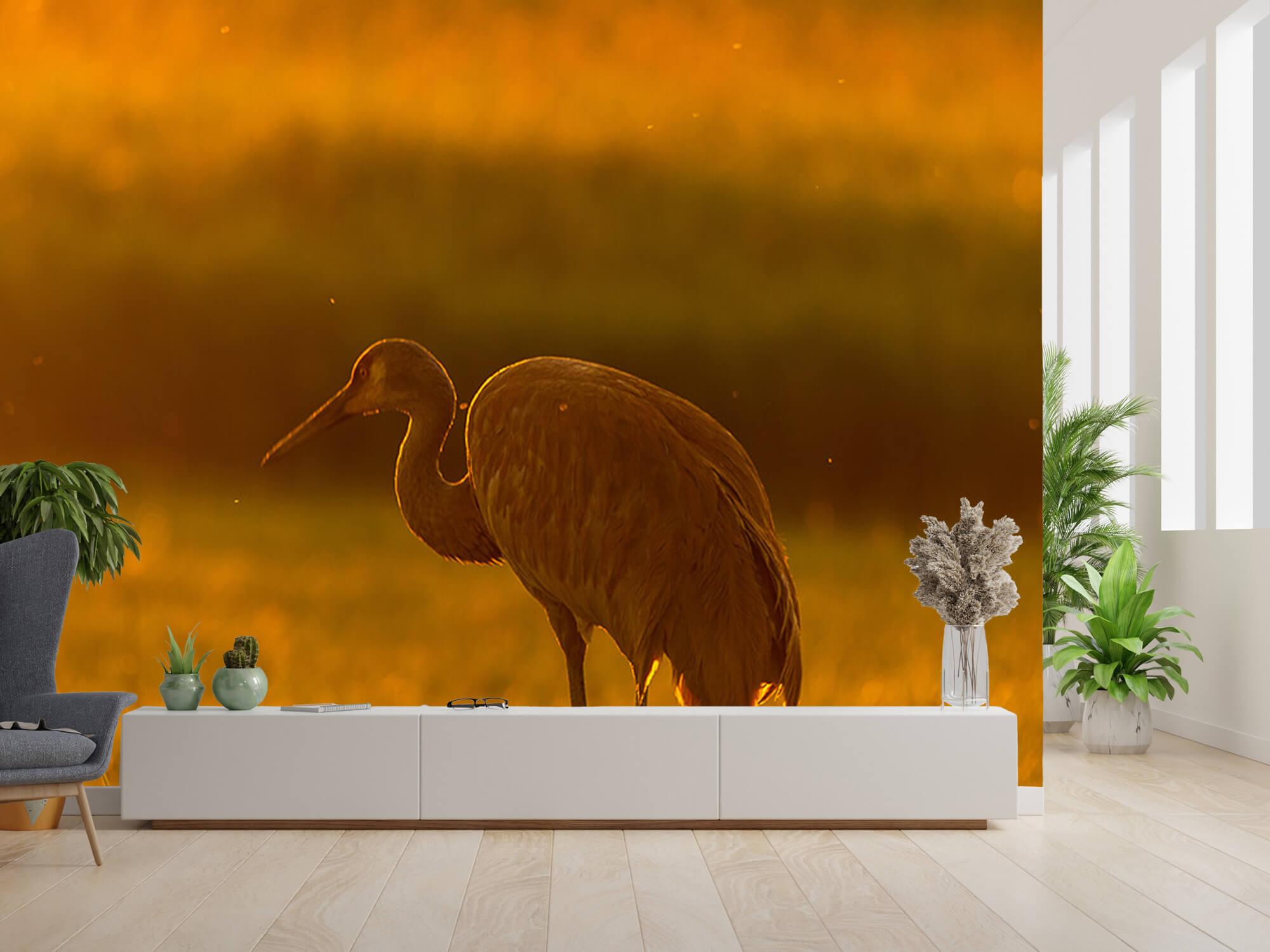 Kraanvogel met zonsondergang 4