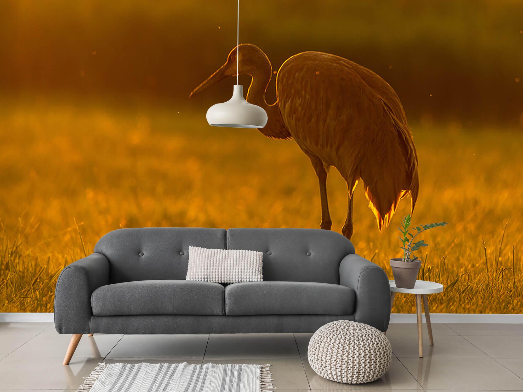 Kraanvogel met zonsondergang 2