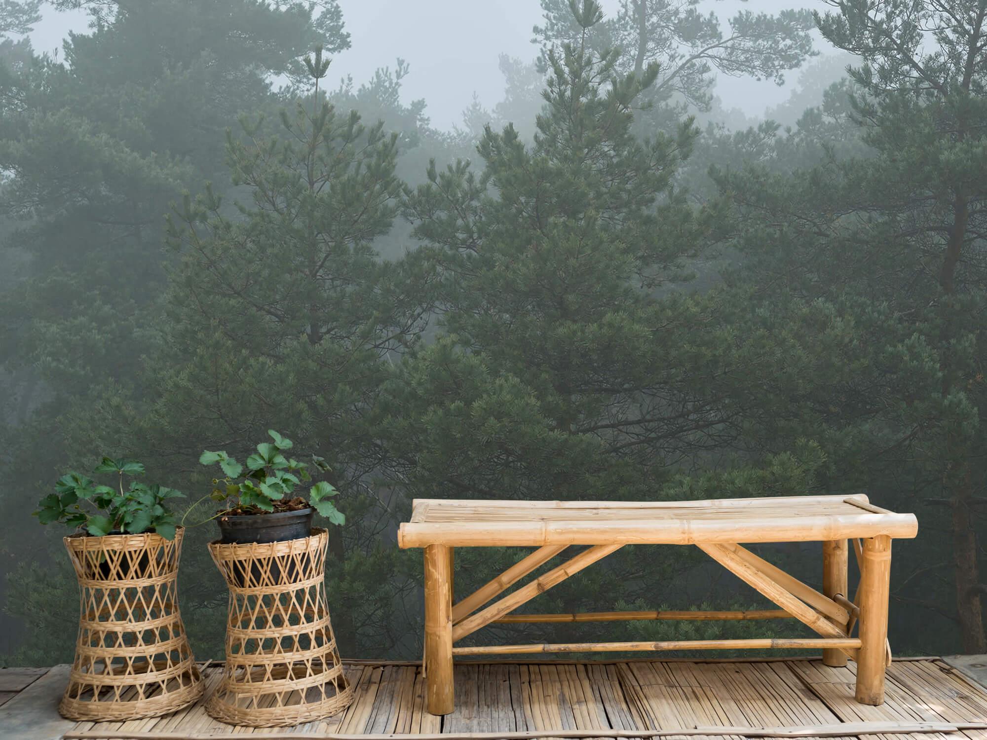 Natuur Naaldbomen in de mist 7