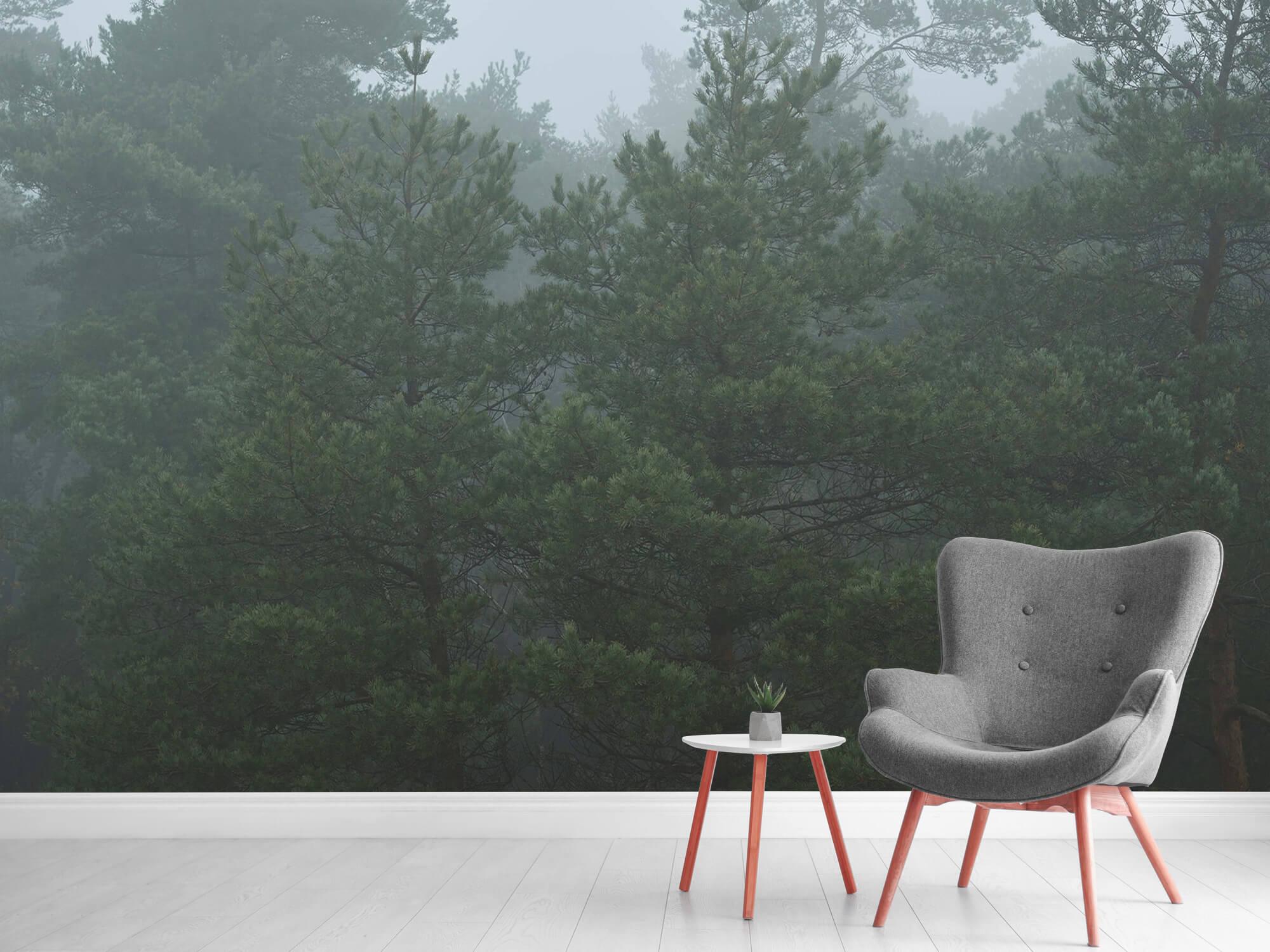 Natuur Naaldbomen in de mist 2