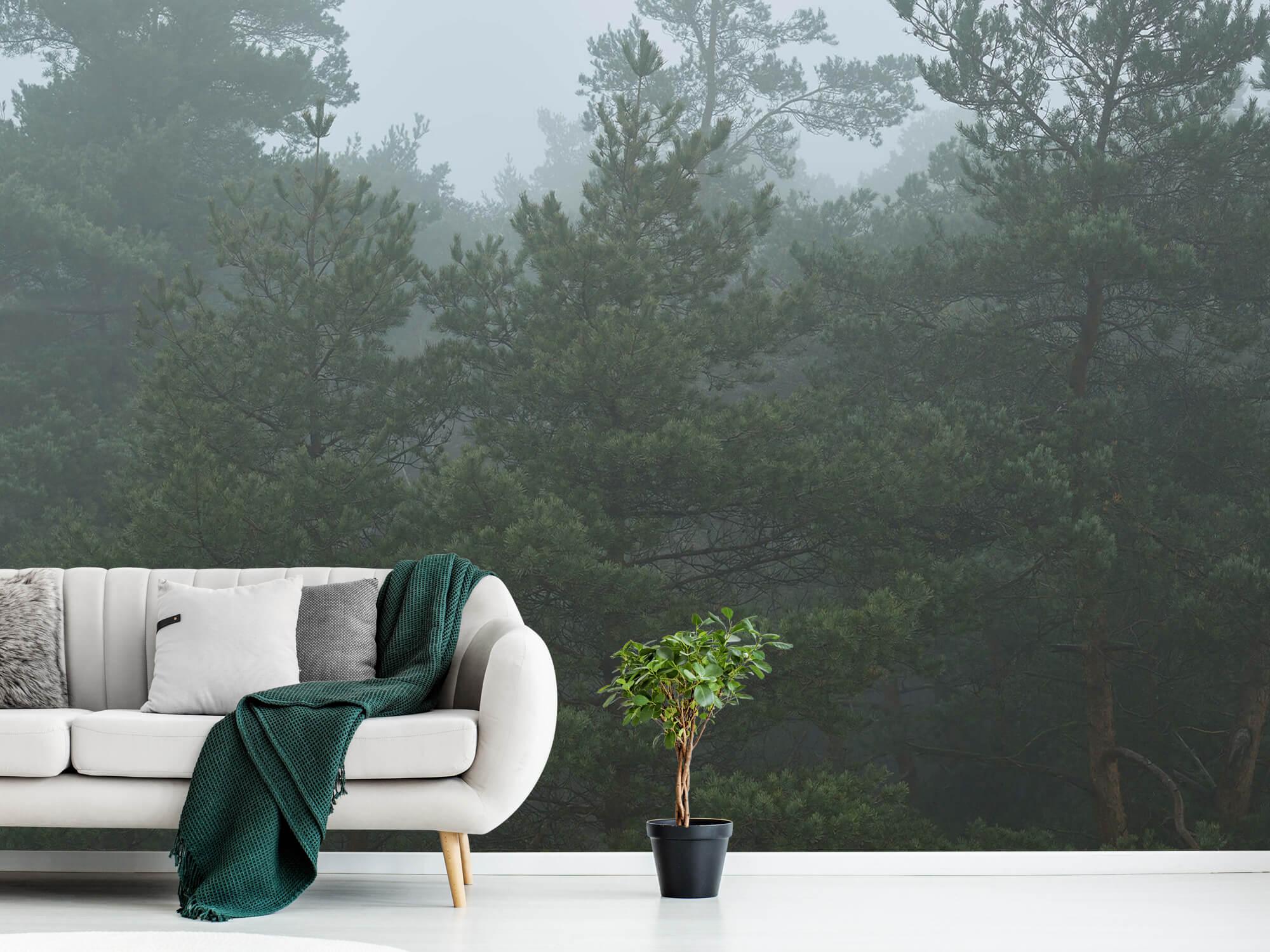 Natuur Naaldbomen in de mist 1
