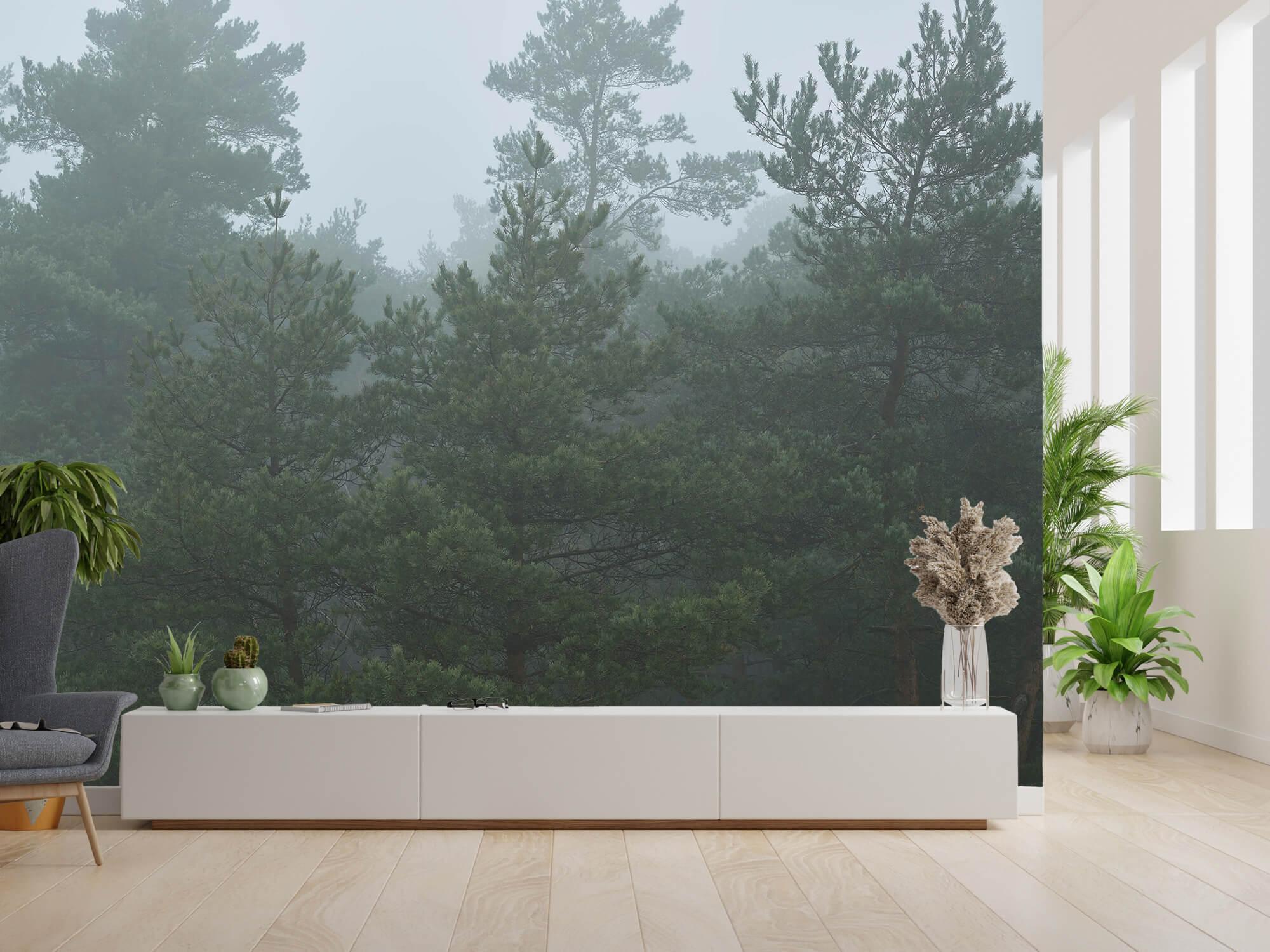 Natuur Naaldbomen in de mist 6