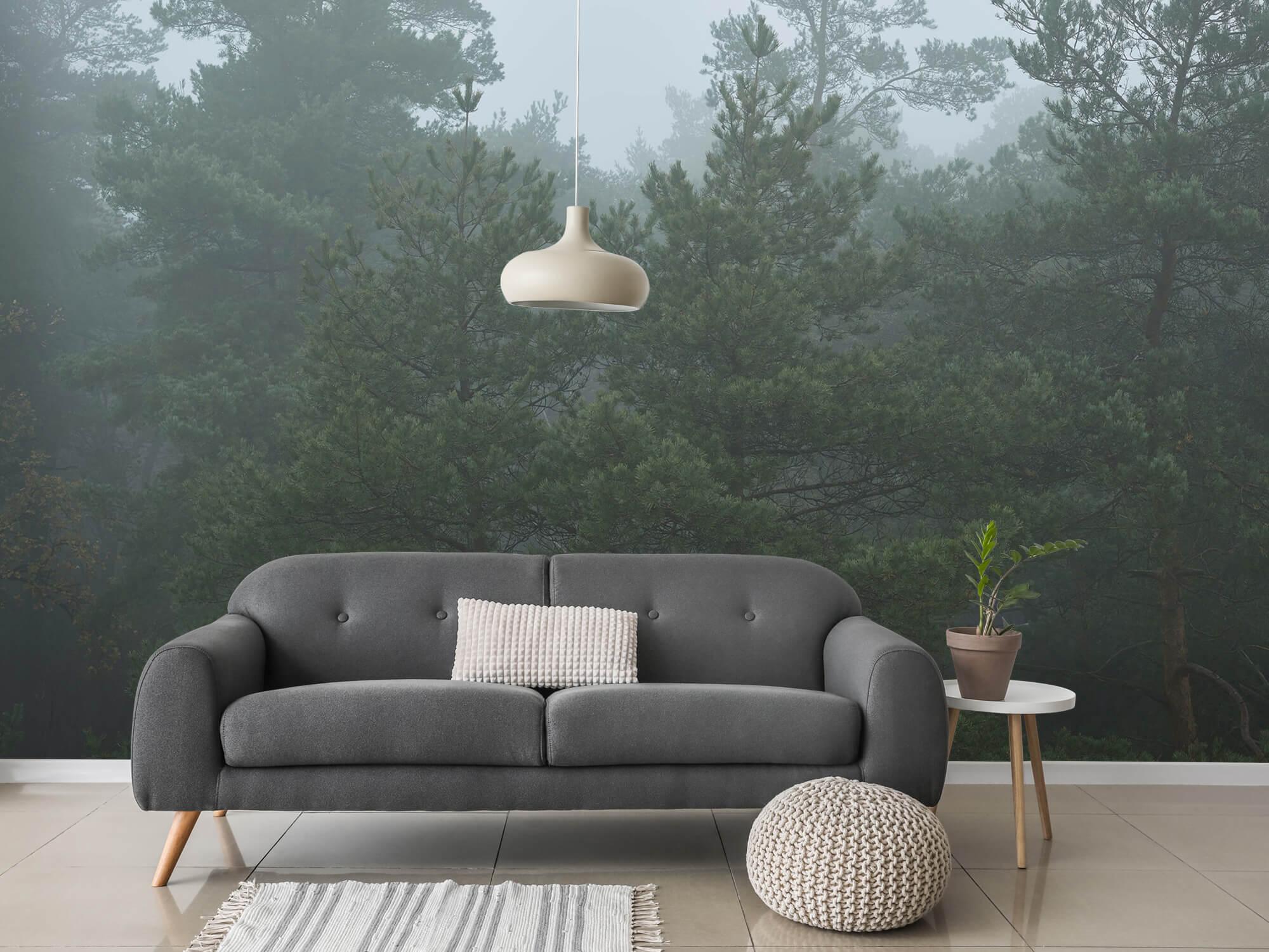 Natuur Naaldbomen in de mist 4