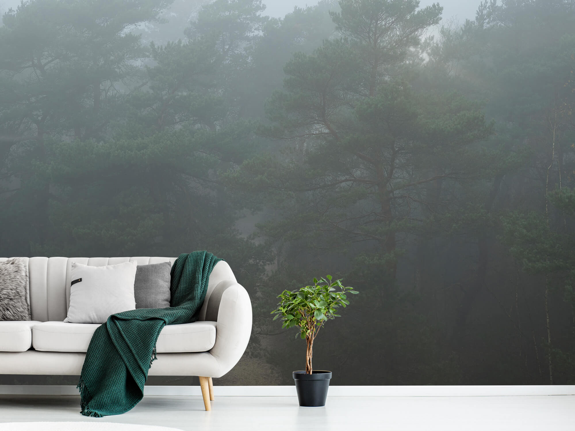 Natuur Pad door mistig bos 7