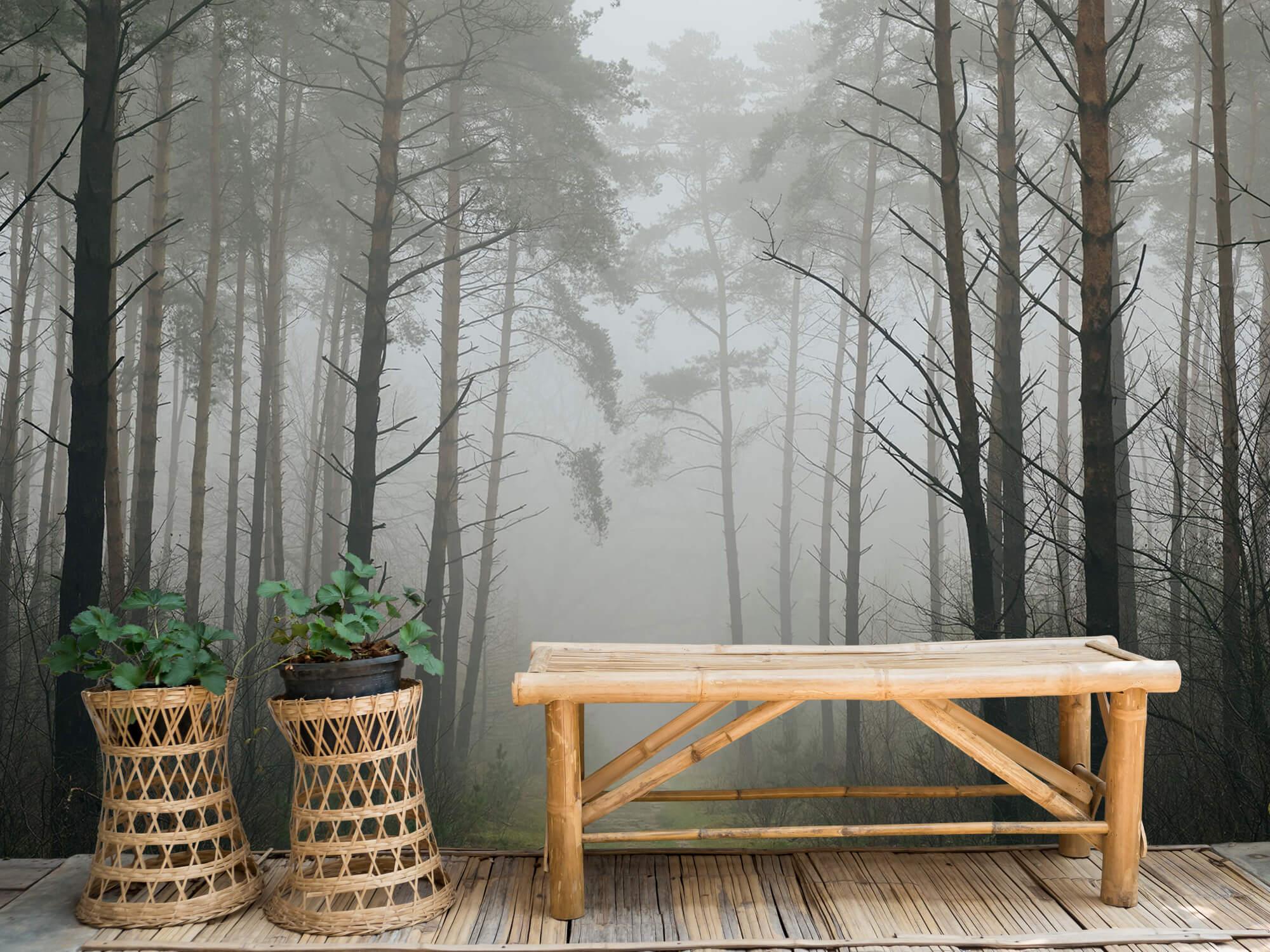 Natuur Pad in mistig bos 1