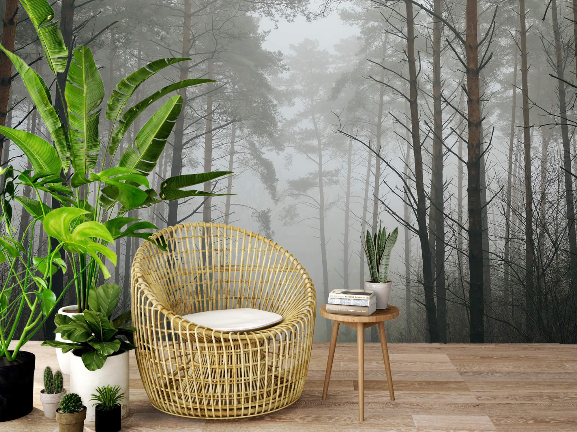 Natuur Pad in mistig bos 6