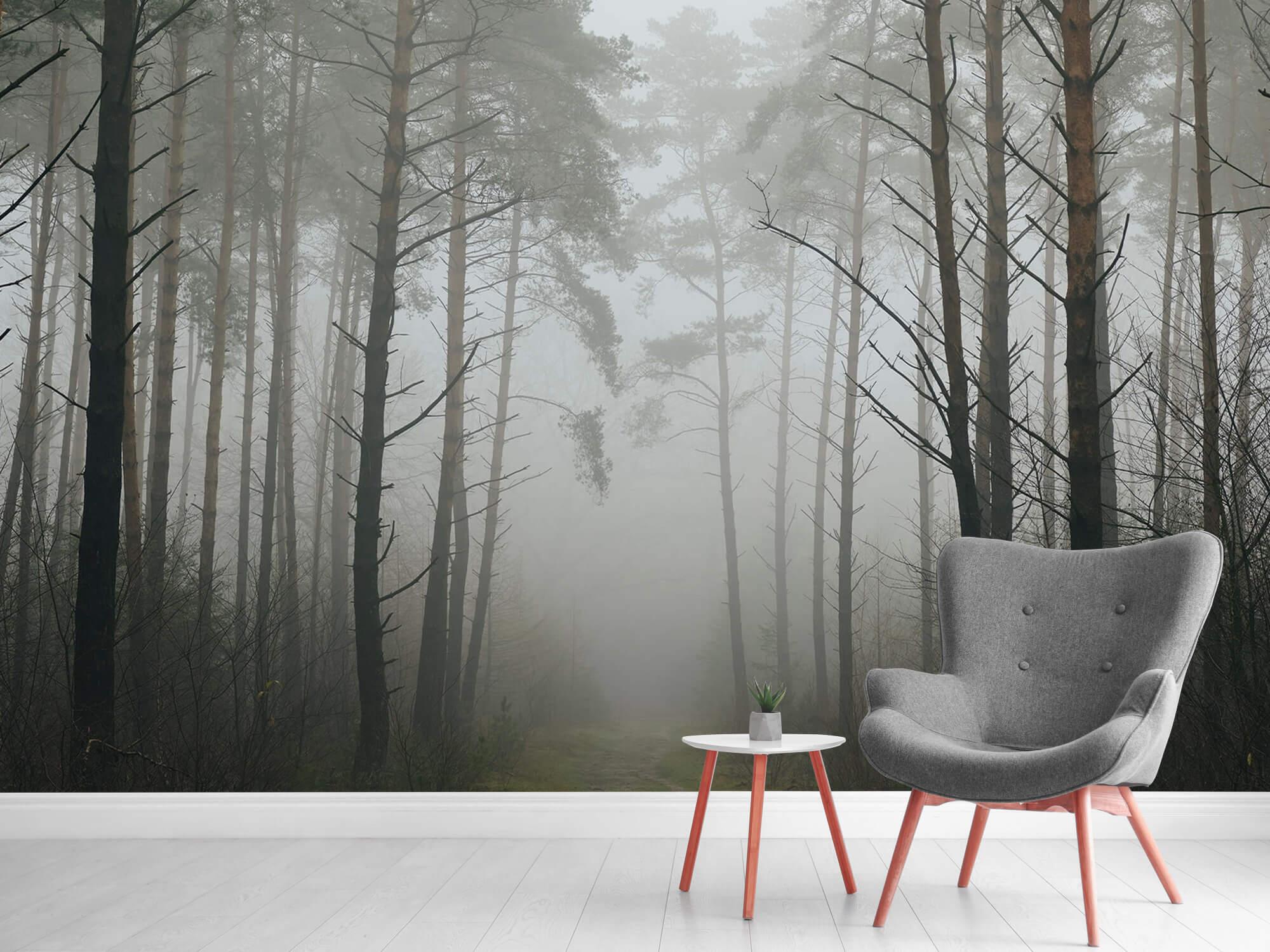 Natuur Pad in mistig bos 10