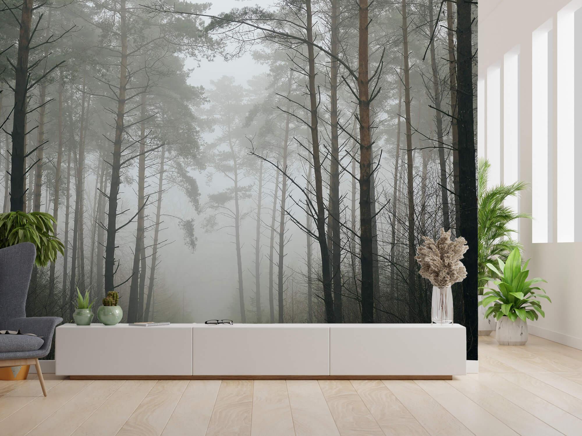 Natuur Pad in mistig bos 9