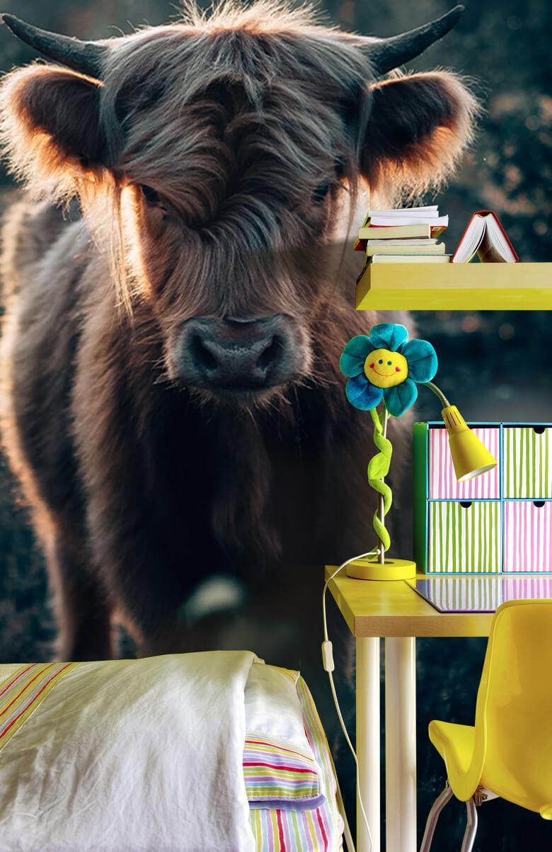 wallpaper Jonge Schotse hooglander 12