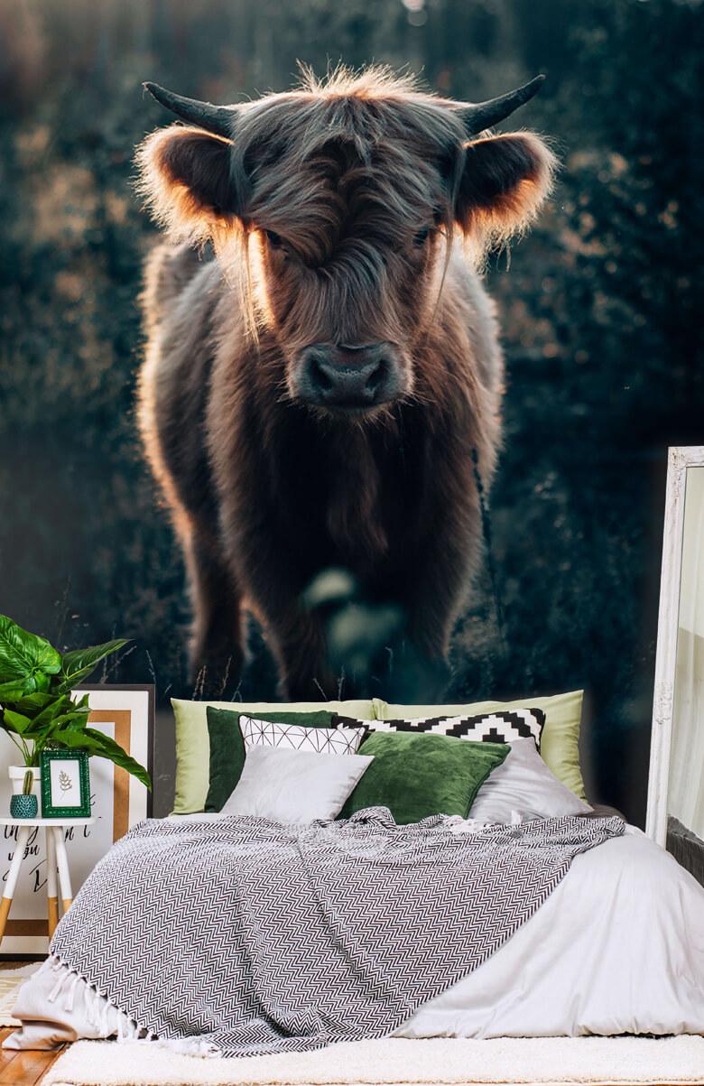 wallpaper Jonge Schotse hooglander 3