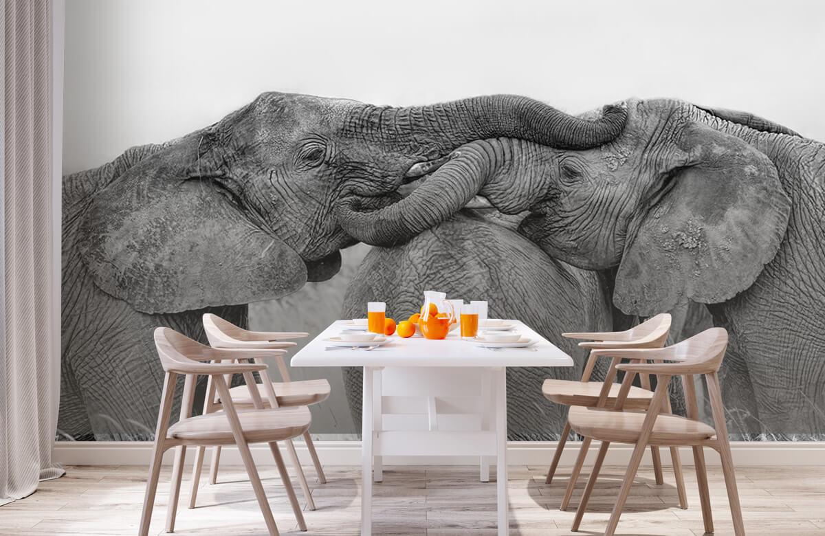 Elephant Playing 1