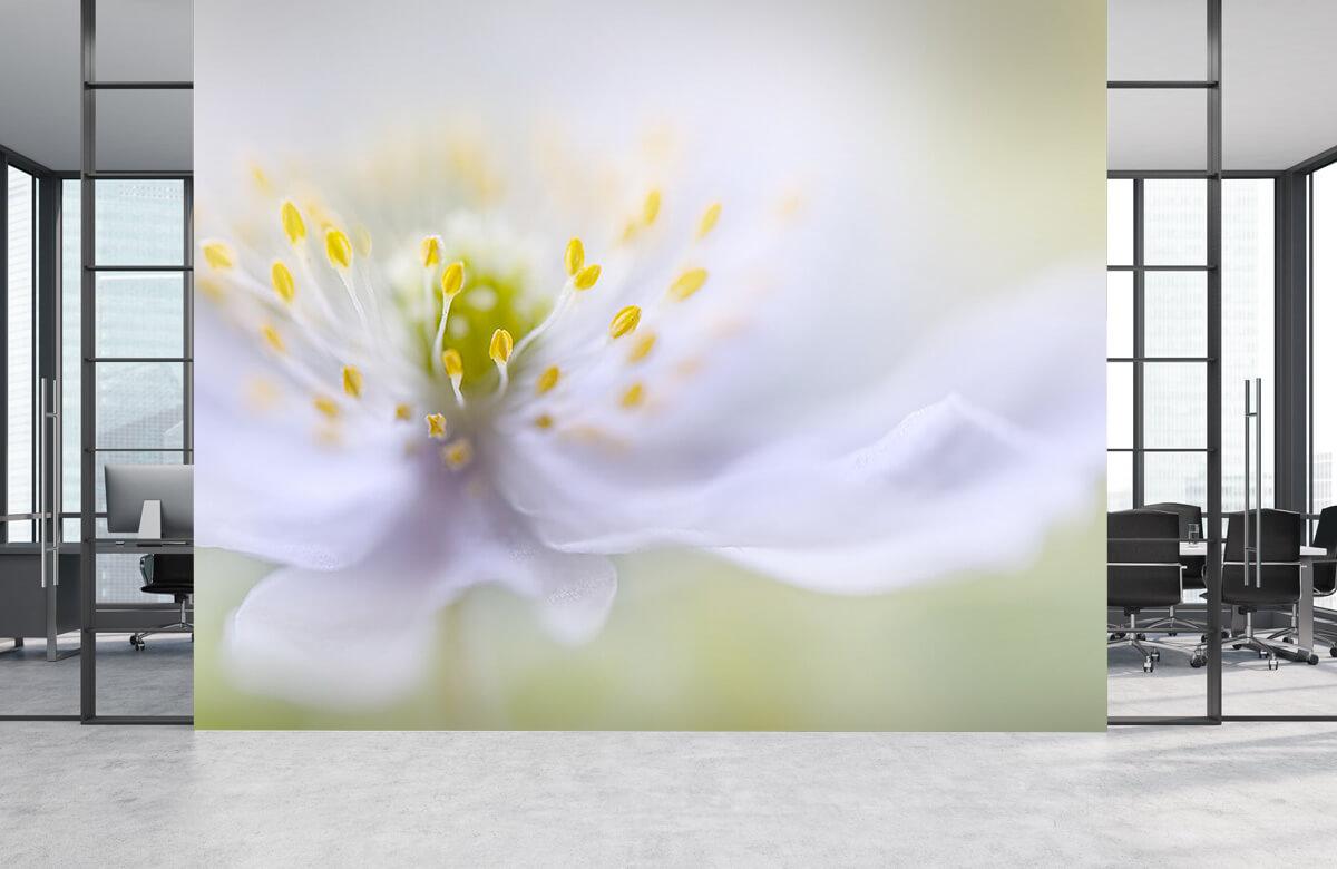Anemone Beauty 7
