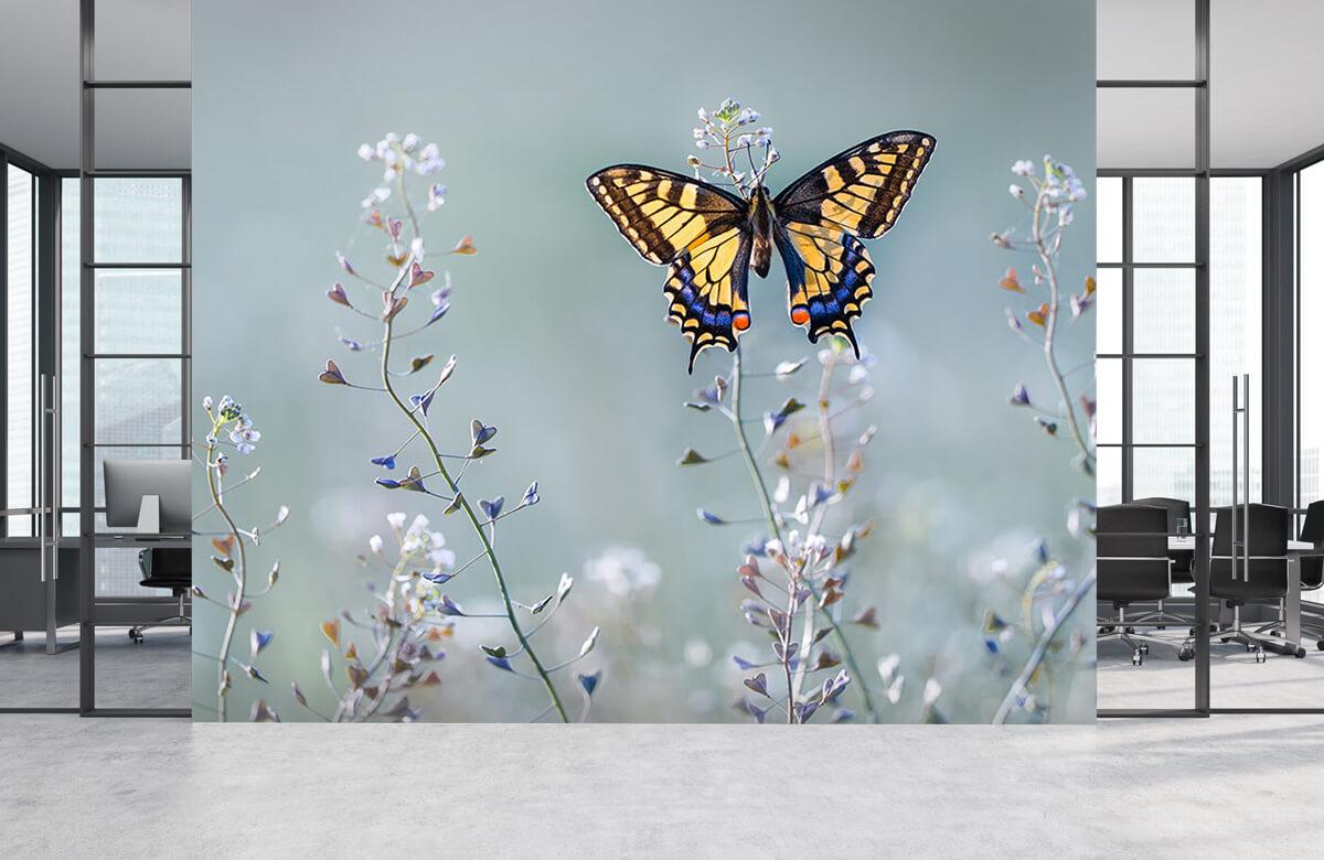 Swallowtail beauty 6