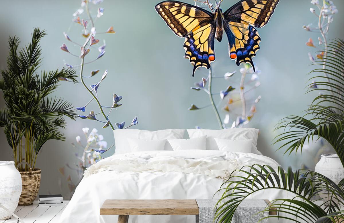 Swallowtail beauty 7