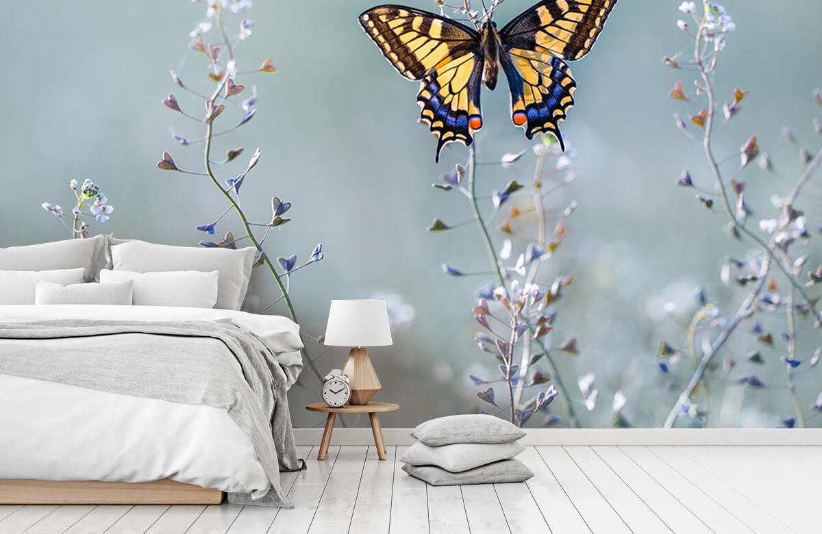 Swallowtail beauty 11