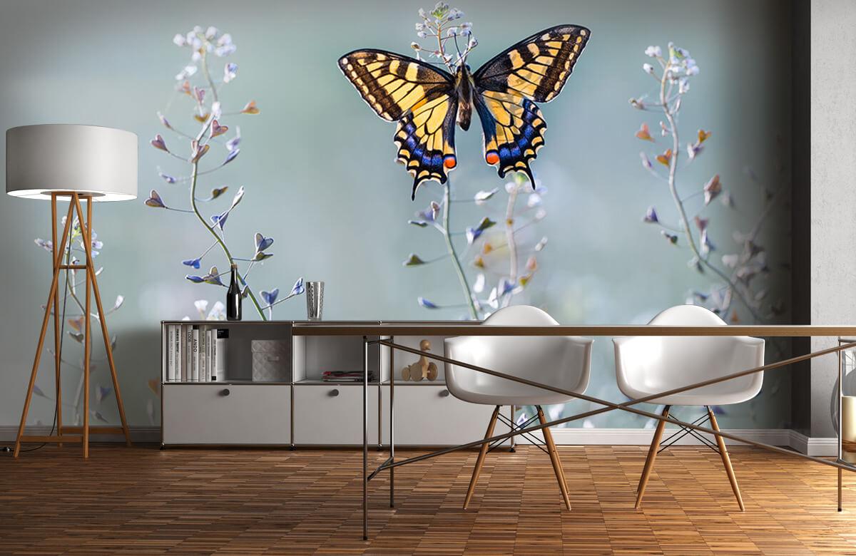 Swallowtail beauty 1
