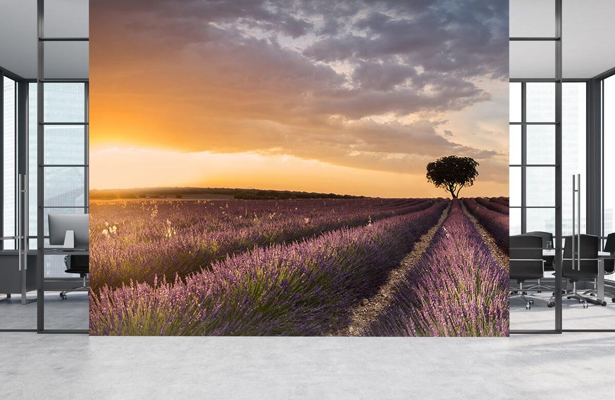 Destination lavender 6