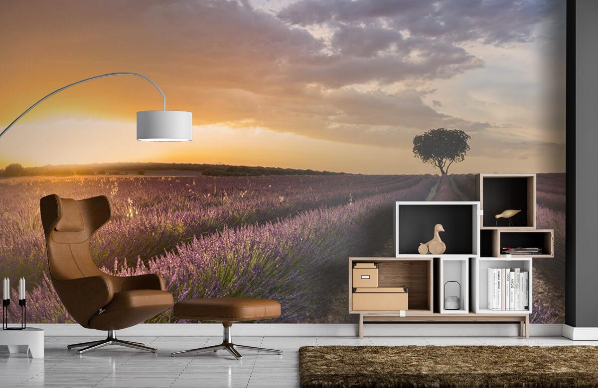Destination lavender 7