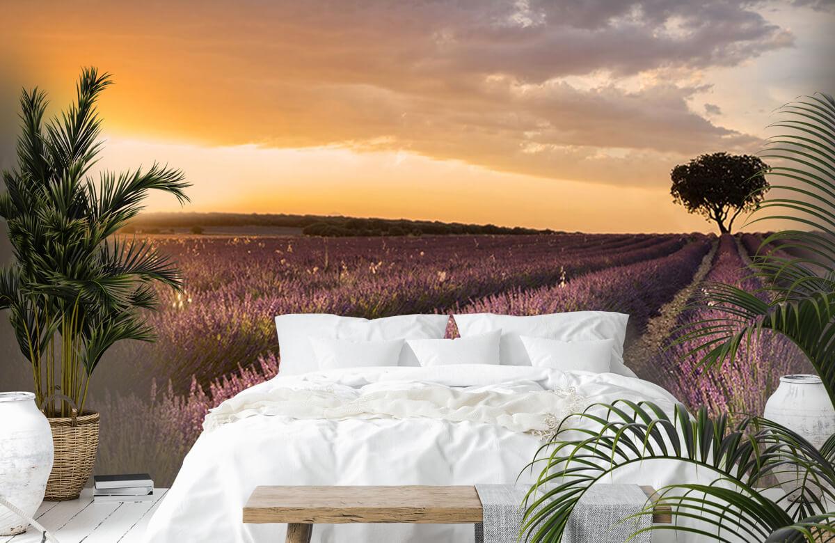 Destination lavender 11