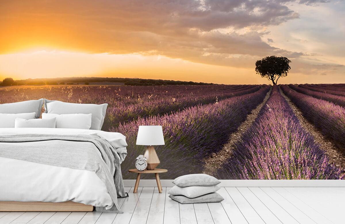 Destination lavender 9