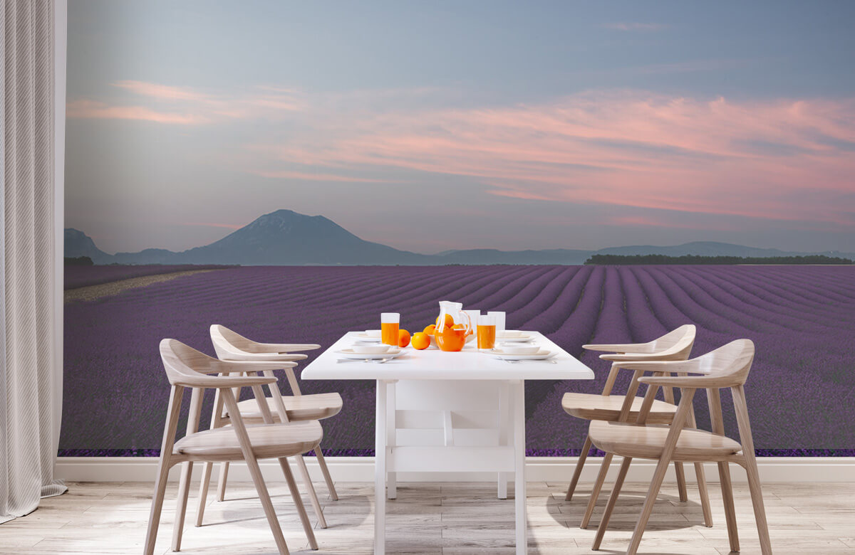 Lavender field 3