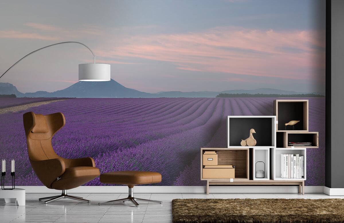 Lavender field 9