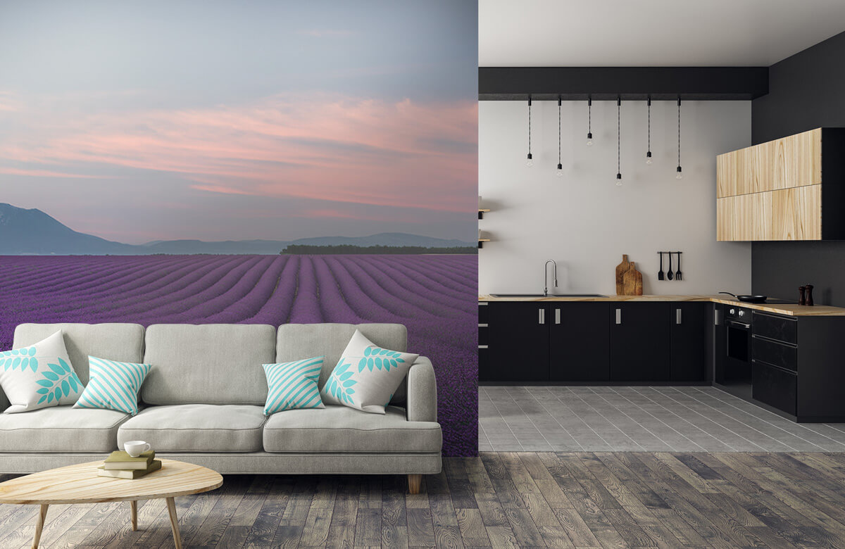 Lavender field 5