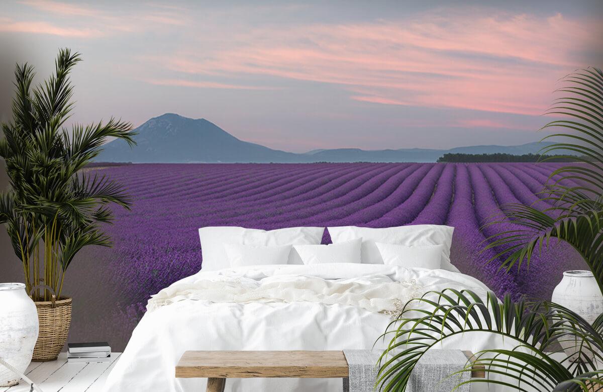 Lavender field 4