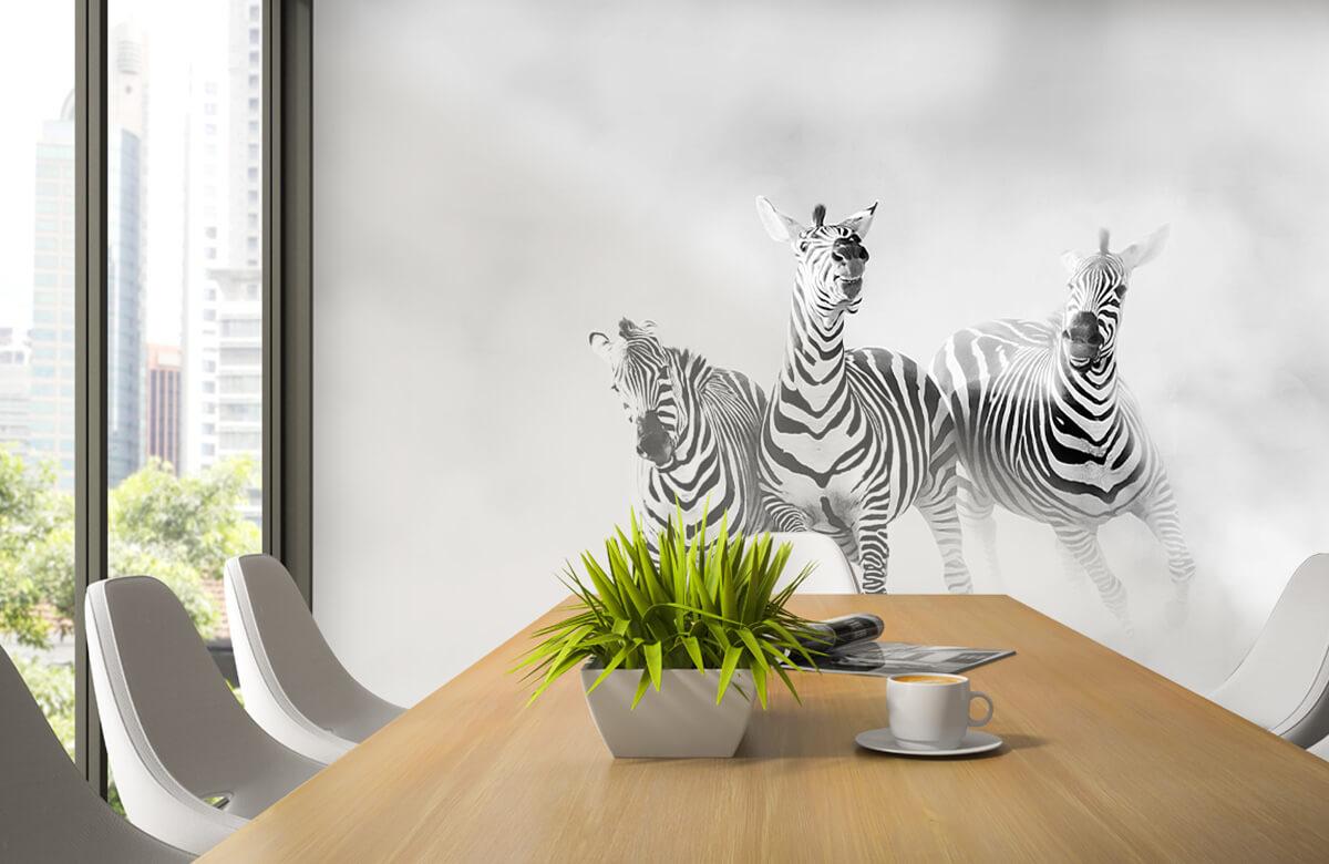 Zebras 6