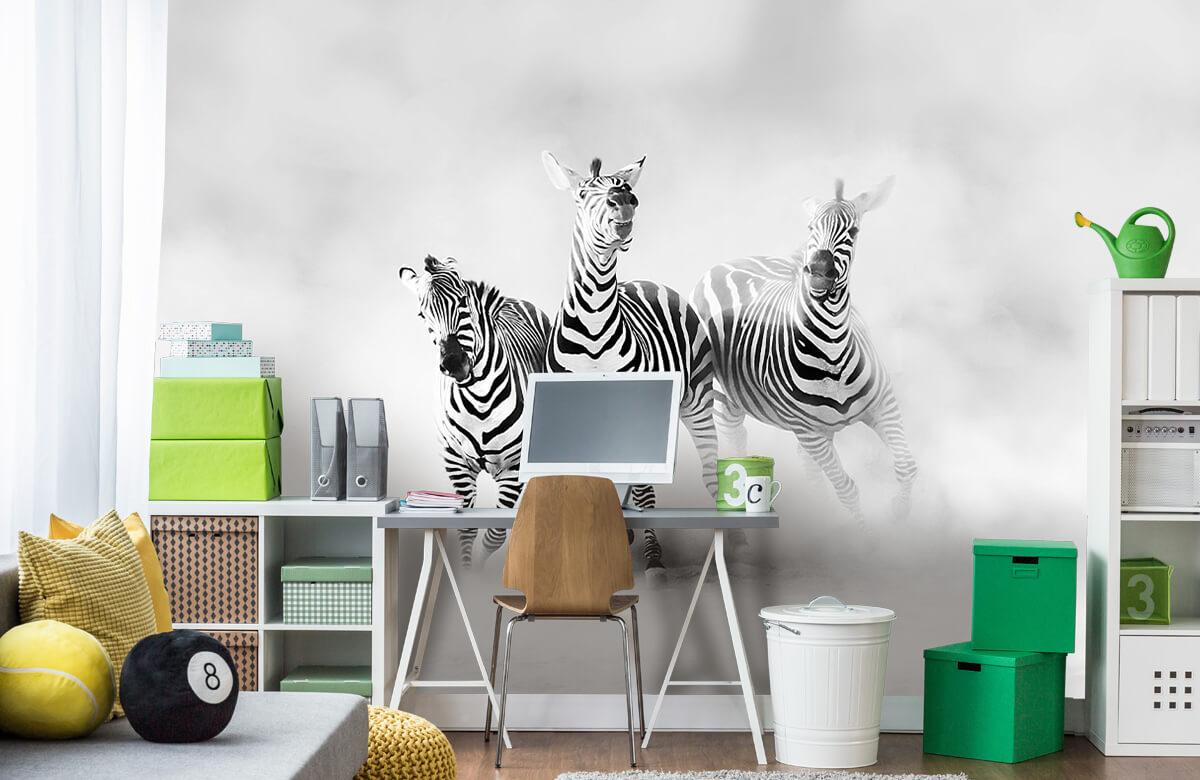 Zebras 11