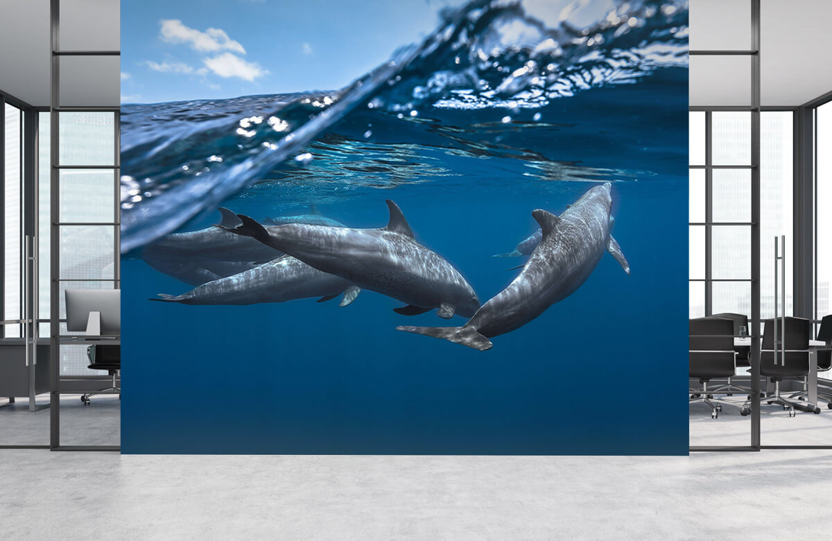 Dolphins 6