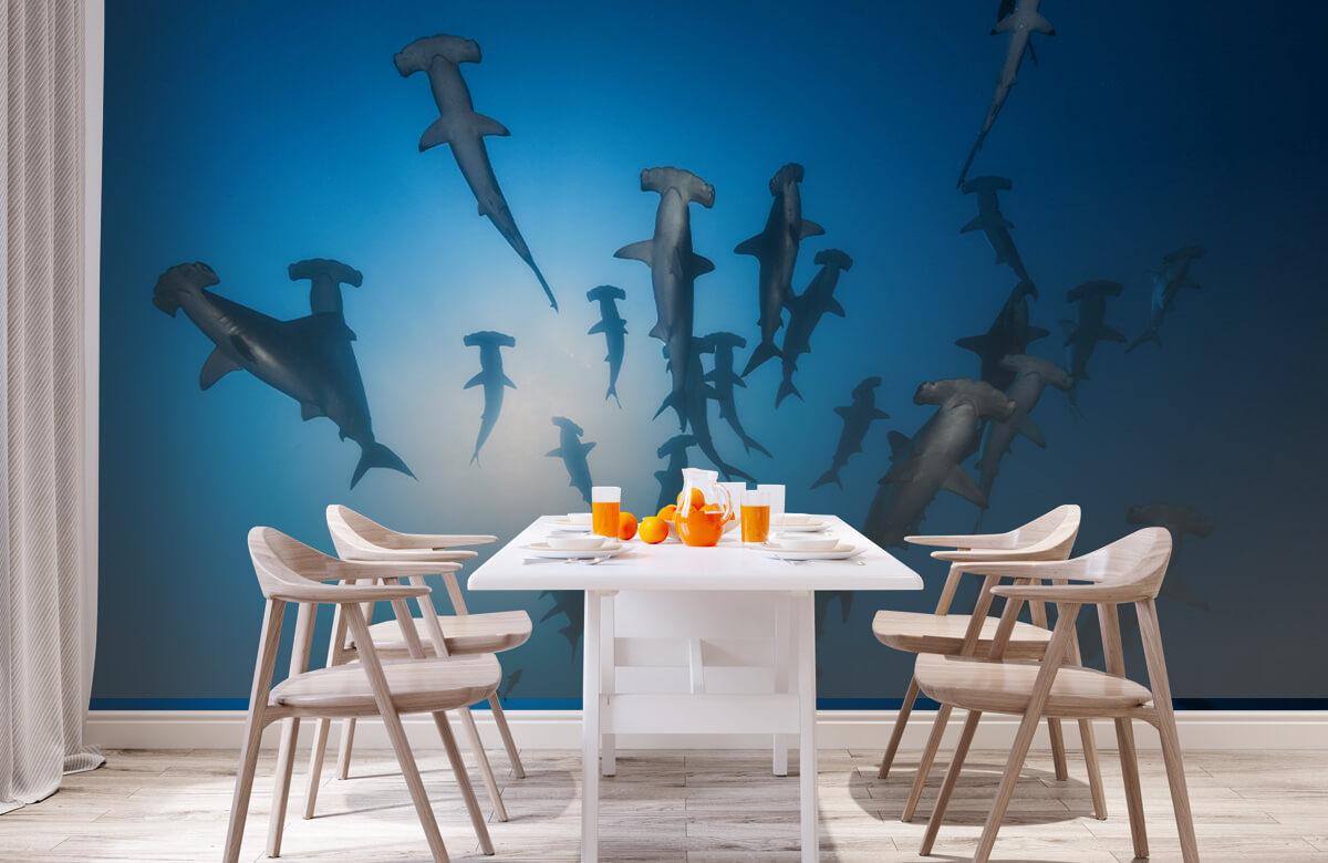 Hammerhead Shark - Underwater Photography 4