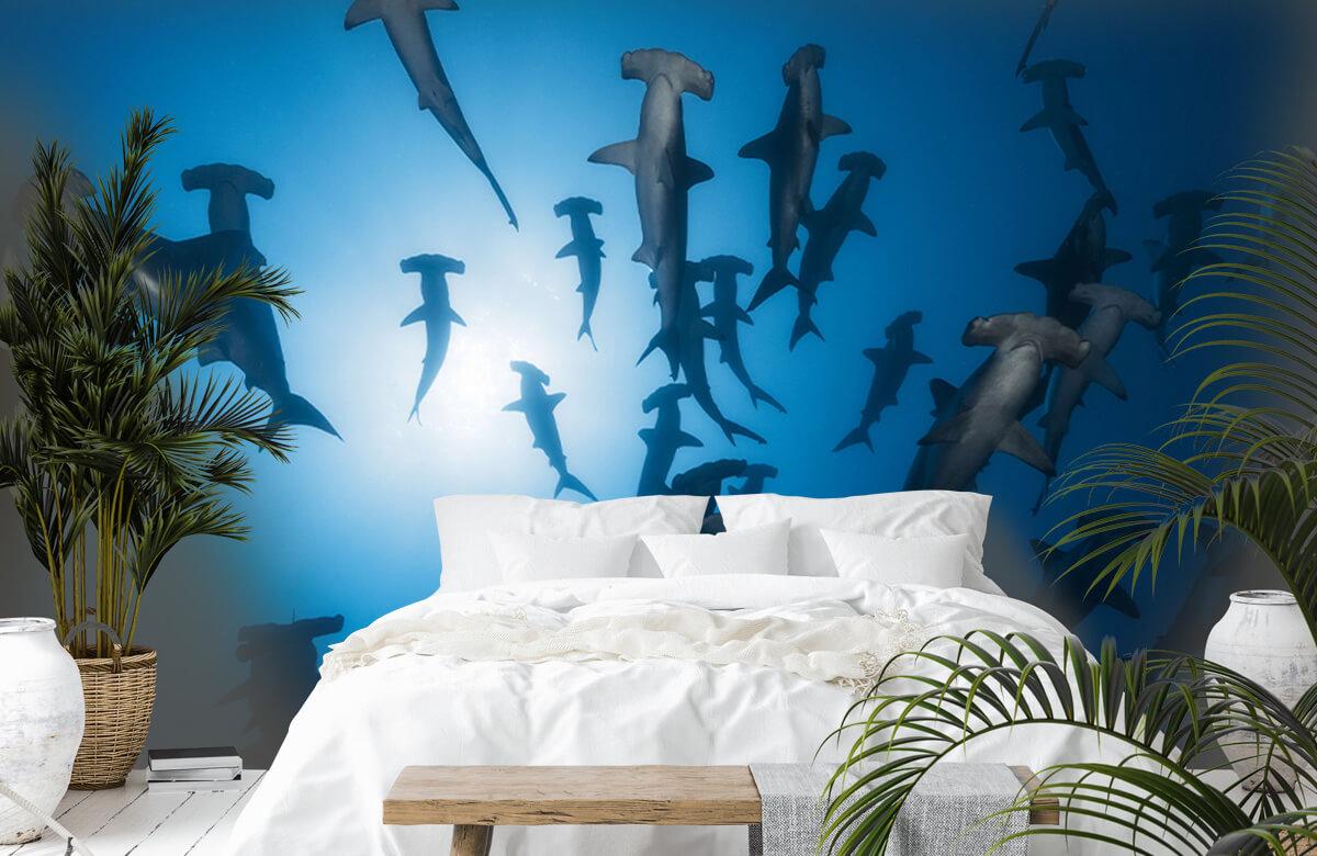 Hammerhead Shark - Underwater Photography 3