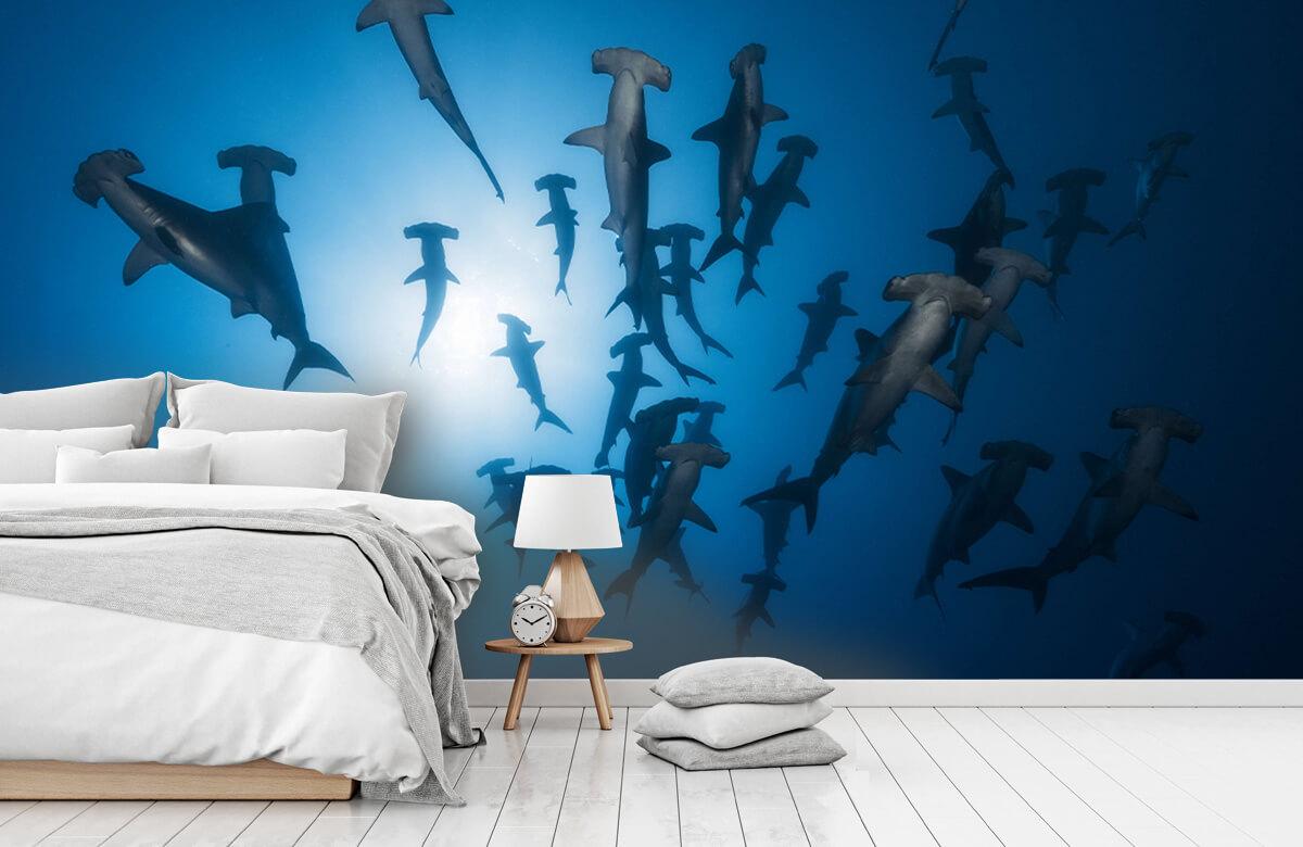 Hammerhead Shark - Underwater Photography 5