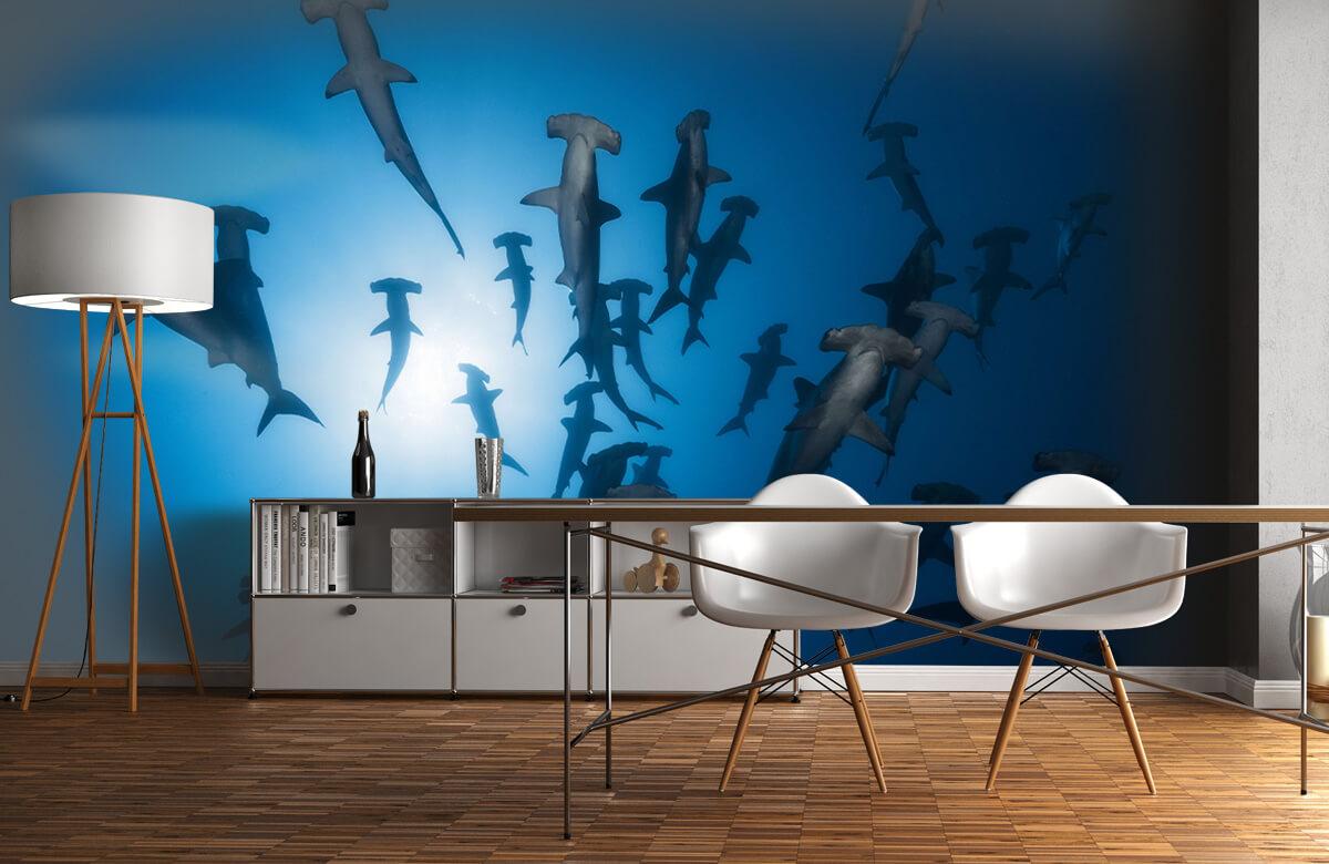 Hammerhead Shark - Underwater Photography 2