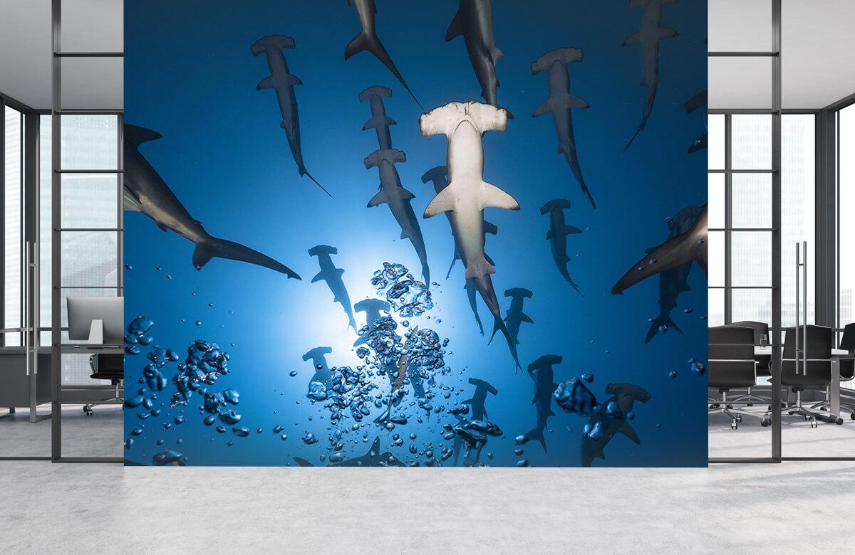 Hammerhead Shark 7