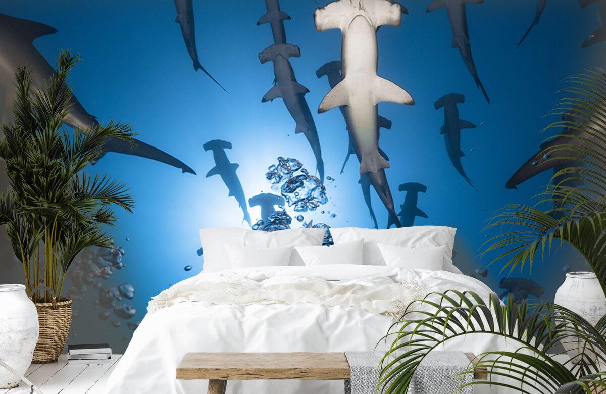 Hammerhead Shark 6
