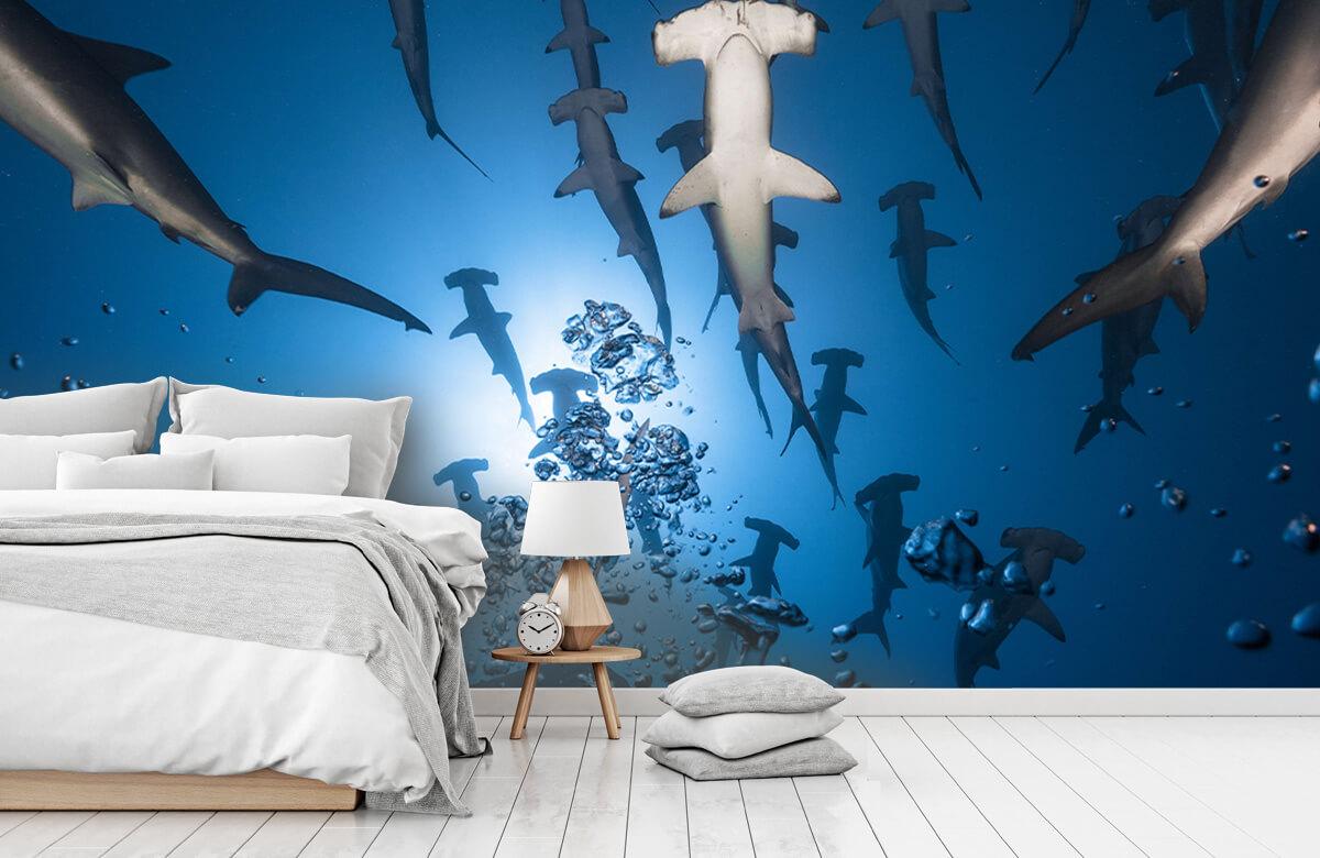 Hammerhead Shark 9