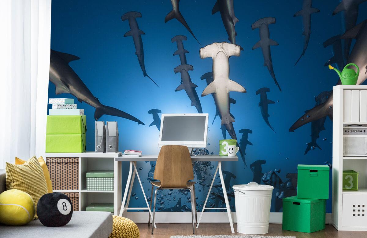 Hammerhead Shark 1