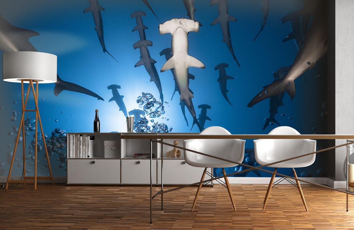 Hammerhead Shark 5