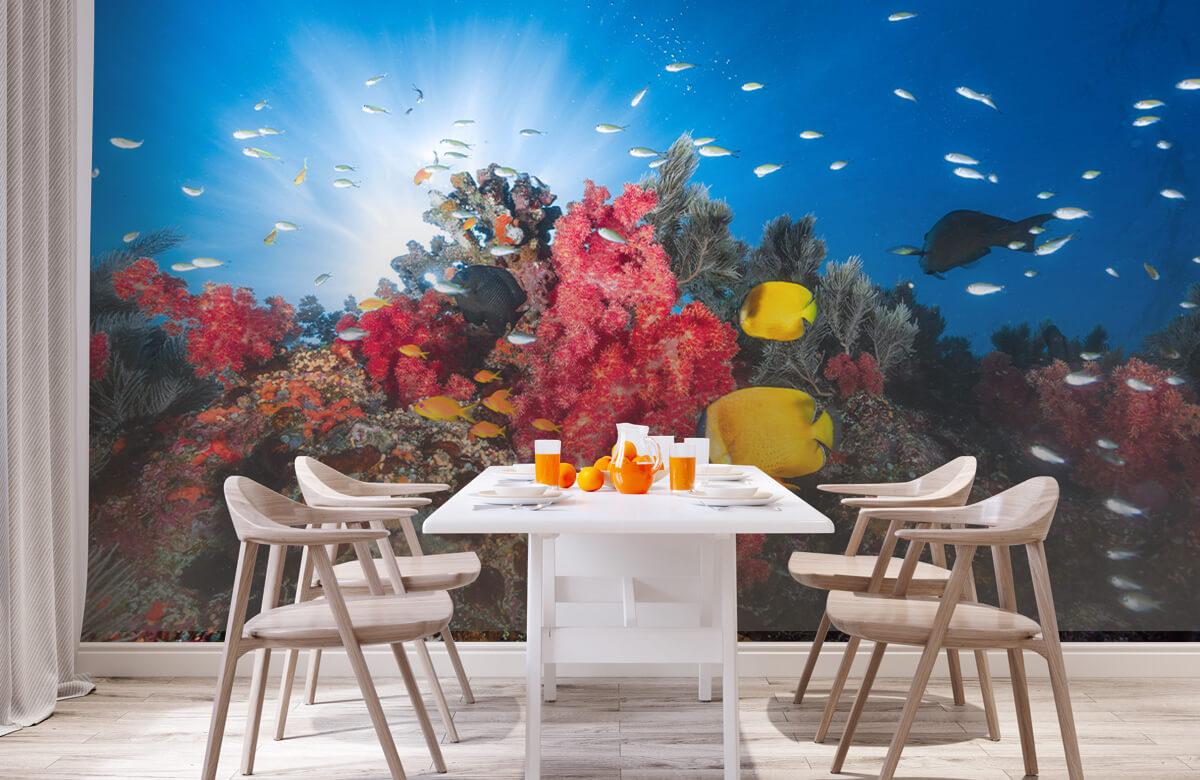 Reef life 5