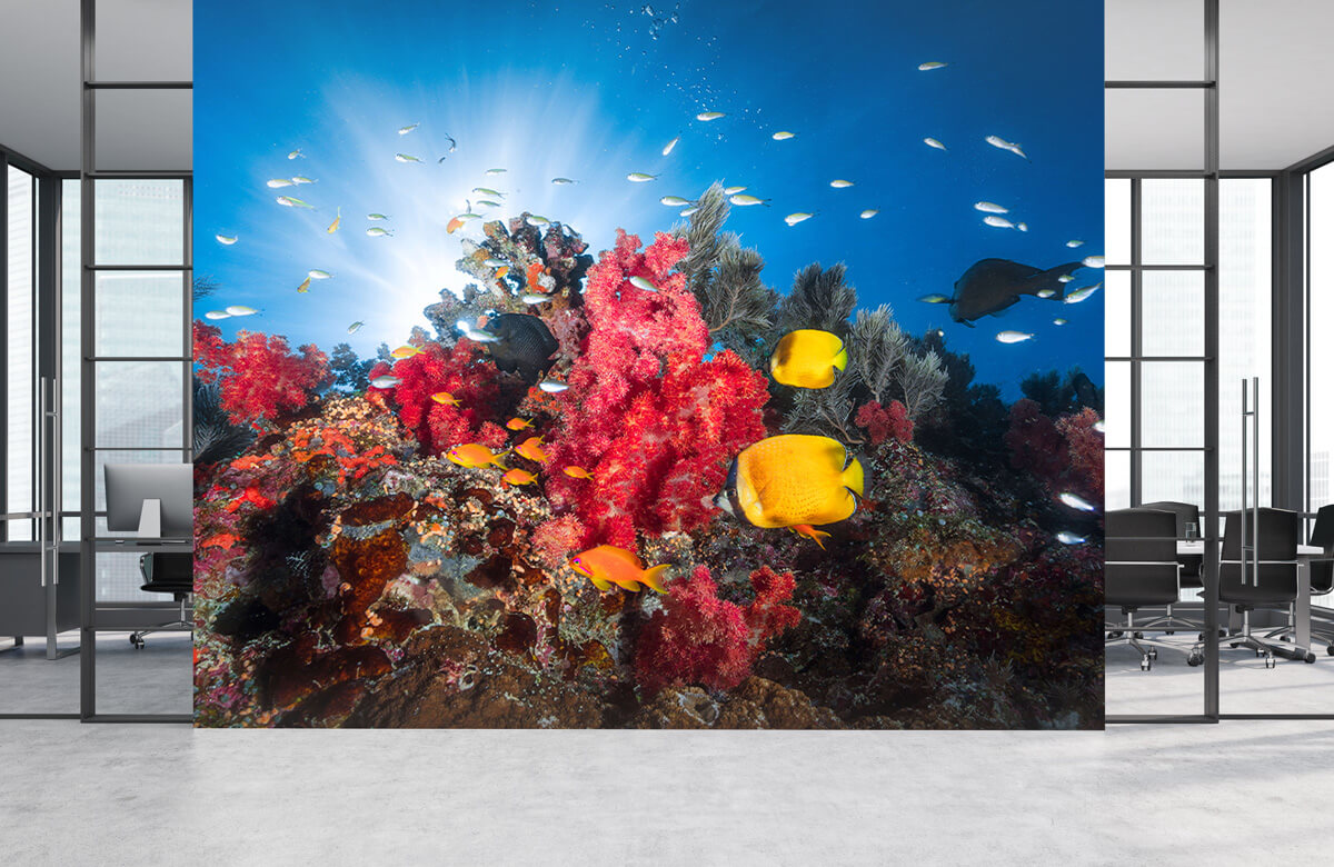 Reef life 4