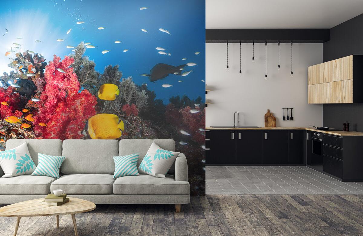 Reef life 9